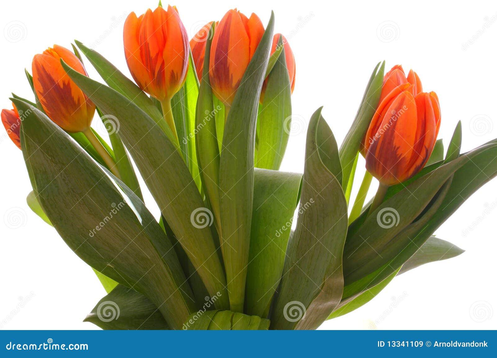 Ustaweni pomarańczowi tulipany