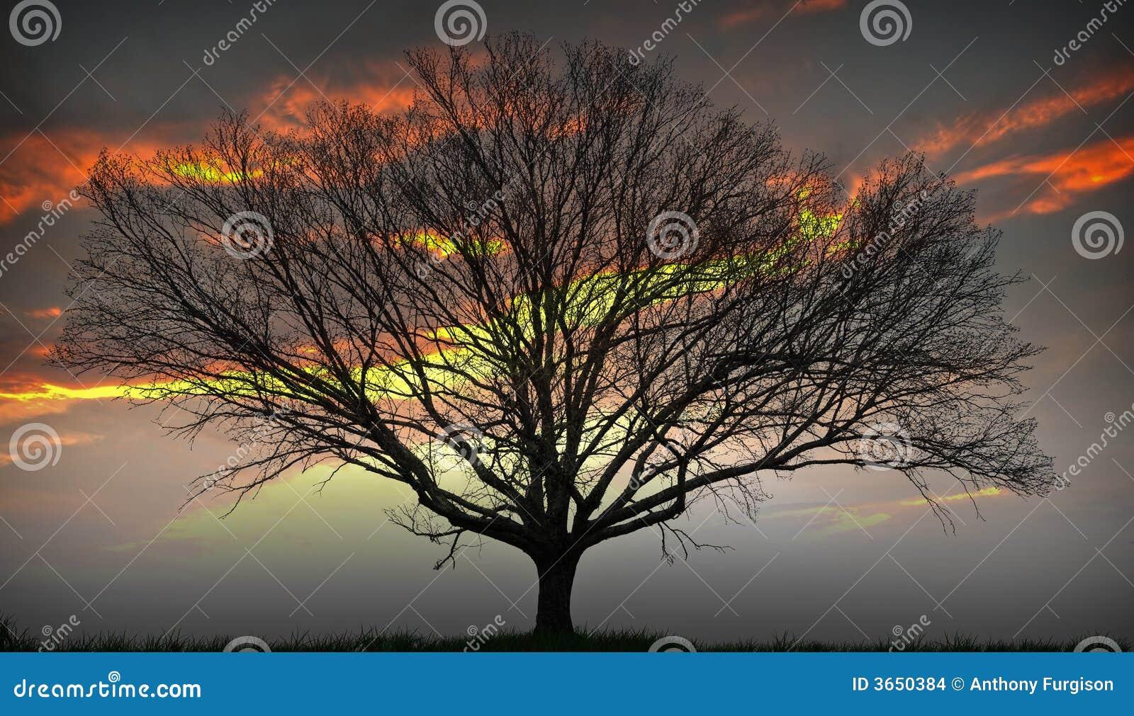 Ustawienia drzewo słońca