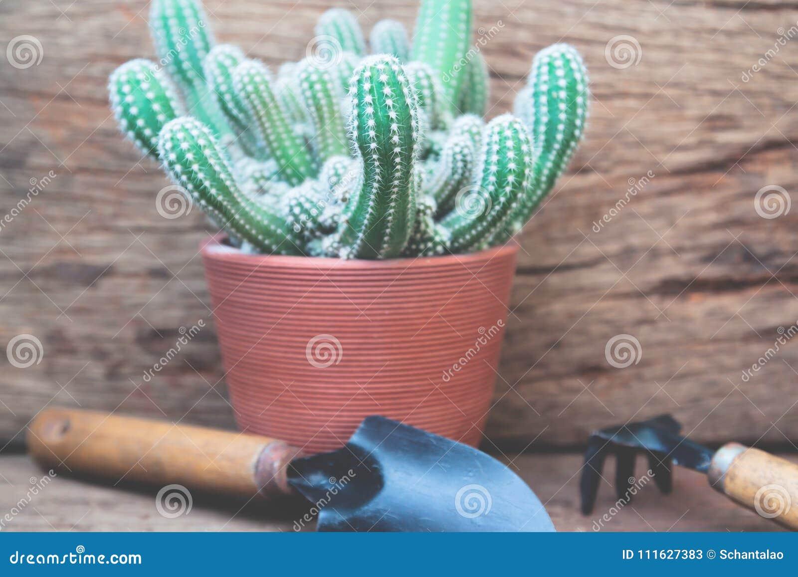 Utensilios De Jardinería Y Planta En La Terraza En El Jardín