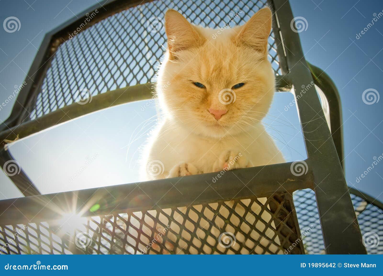 Utomhus- katt