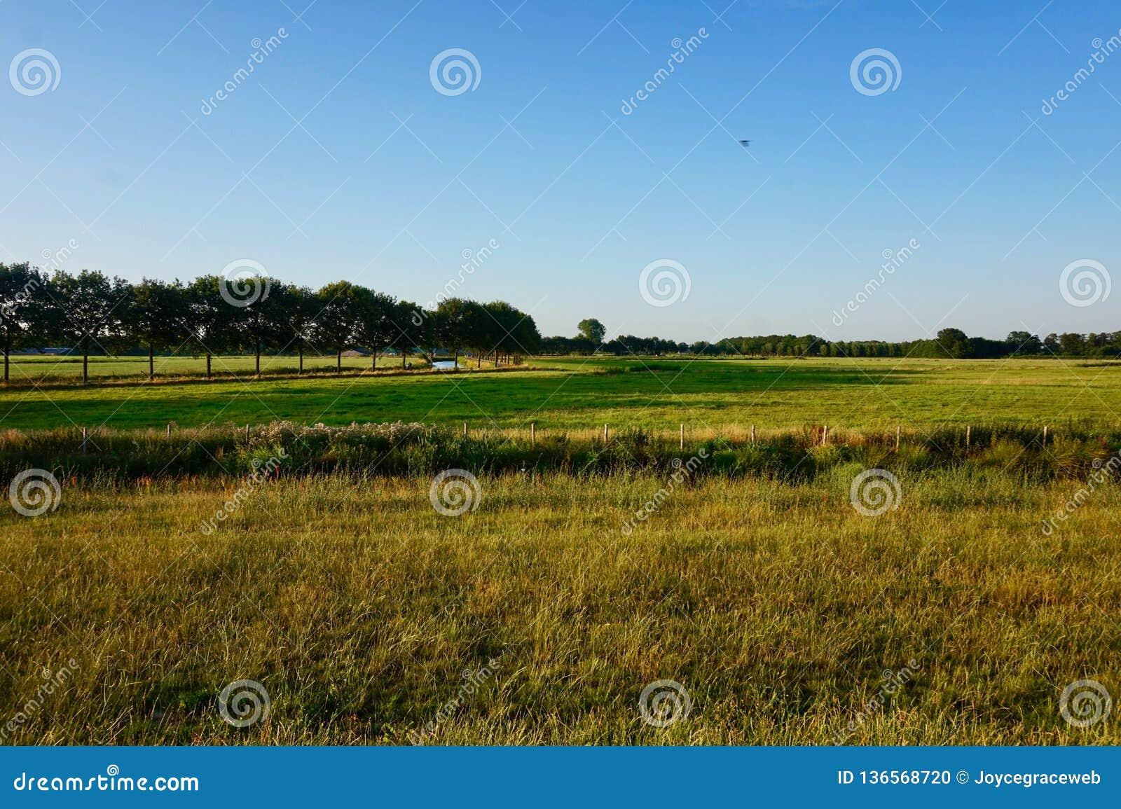 Landscape of Dutch grassy farmland at dusk