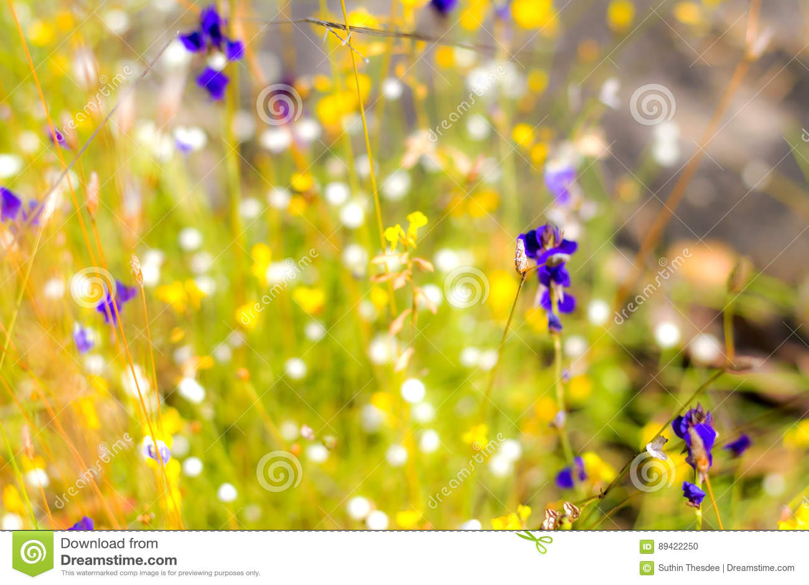 Utricularia da flor exterior