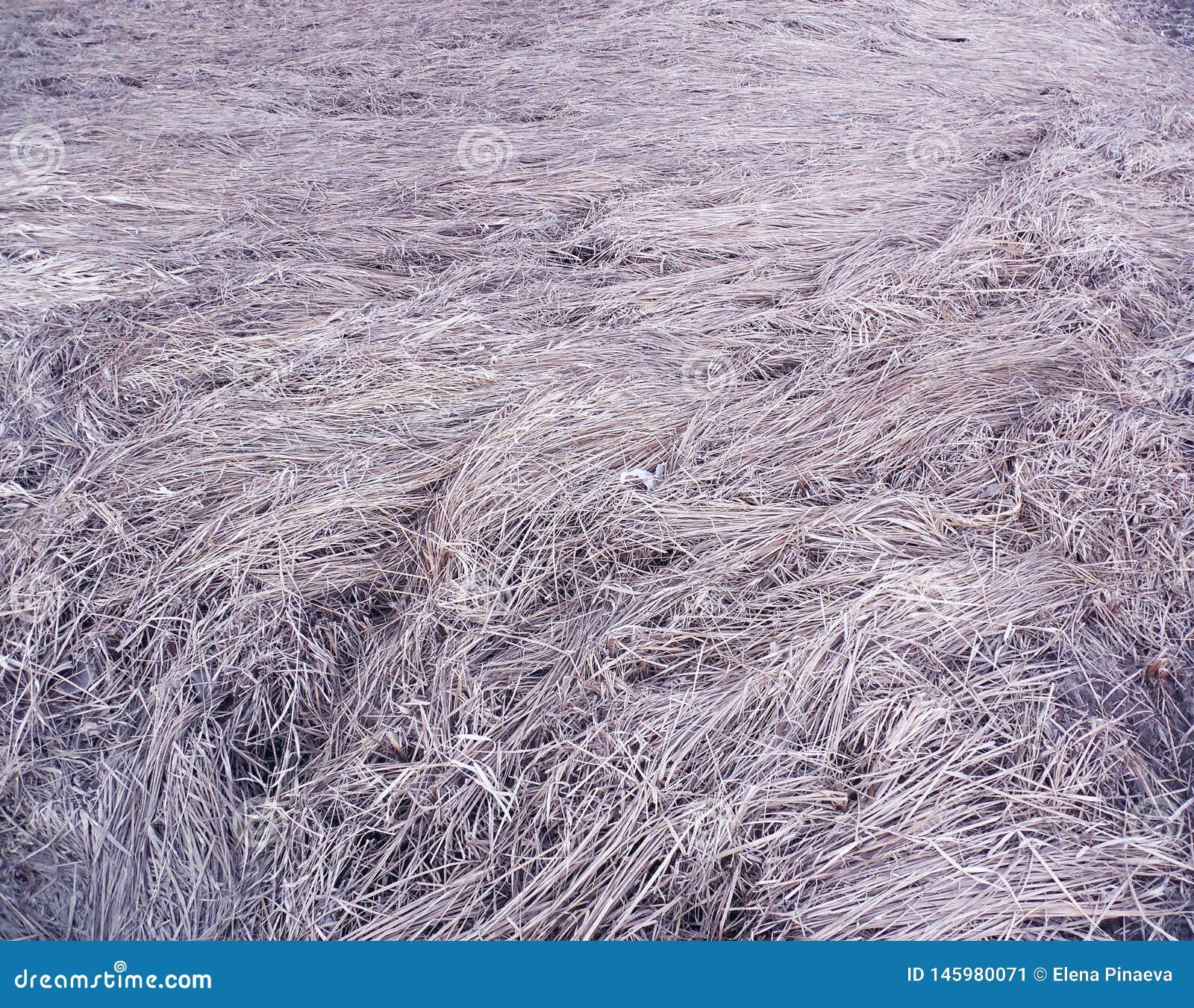 Utrymme av torrt gräs med lila signal