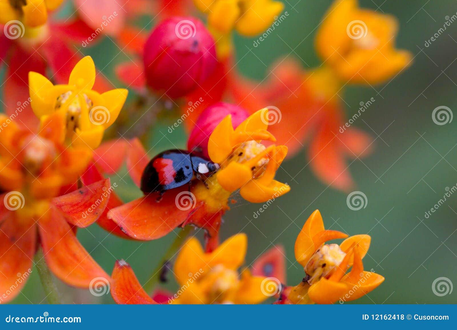 Utskjutande blomma
