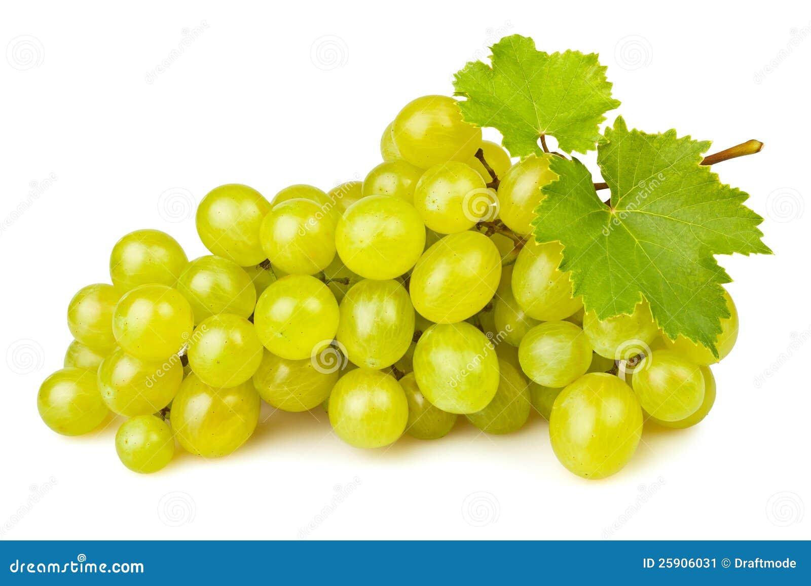 Risultati immagini per immagine uva