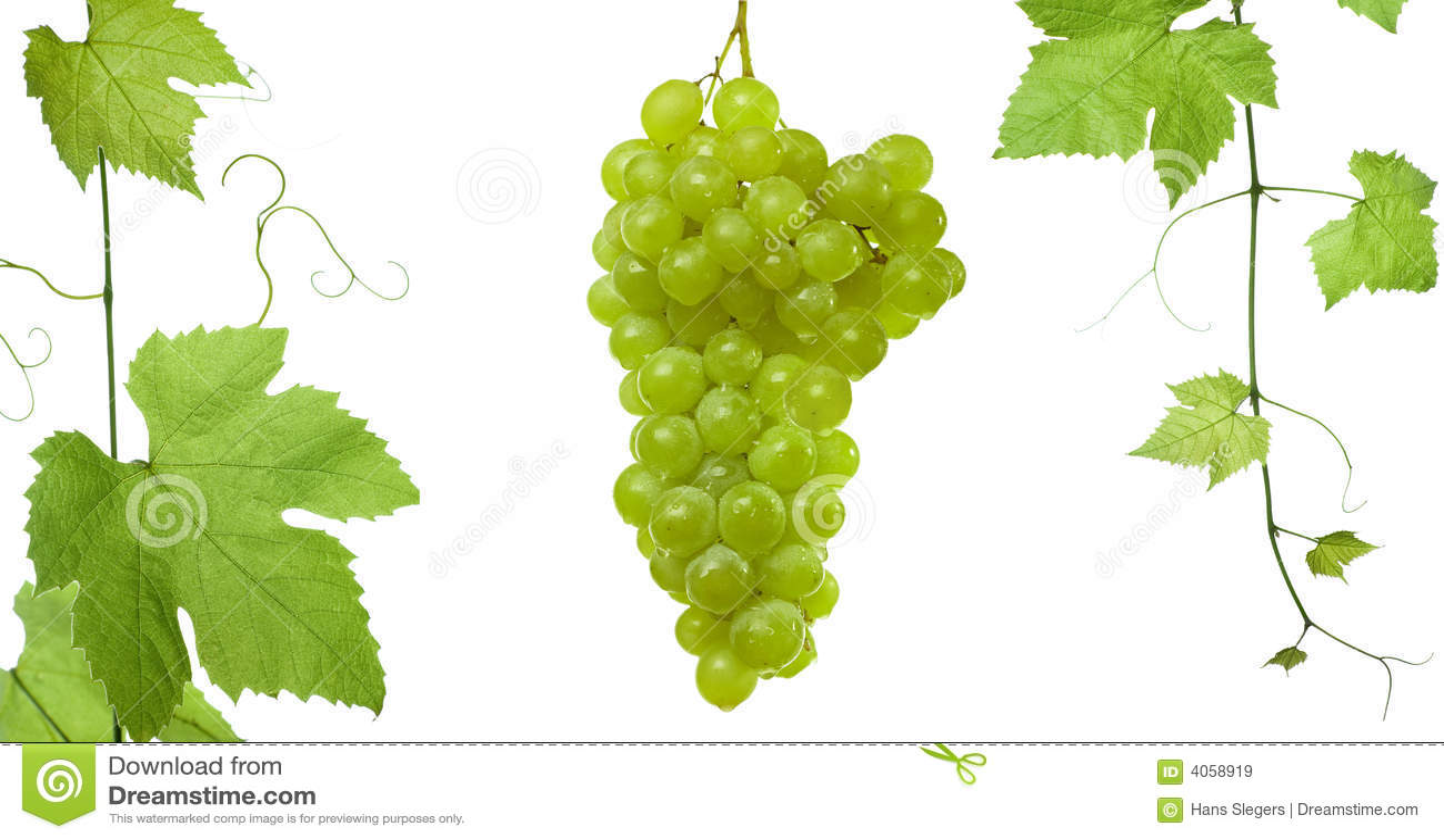 Uva-deixa uvas do ansd