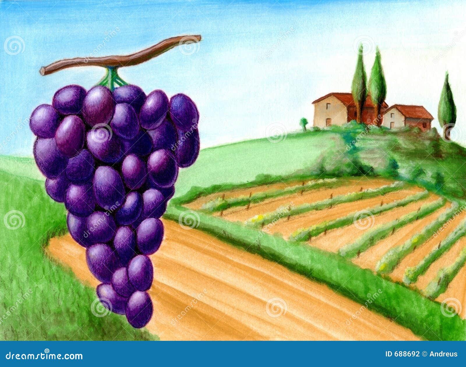Uva y viñedo