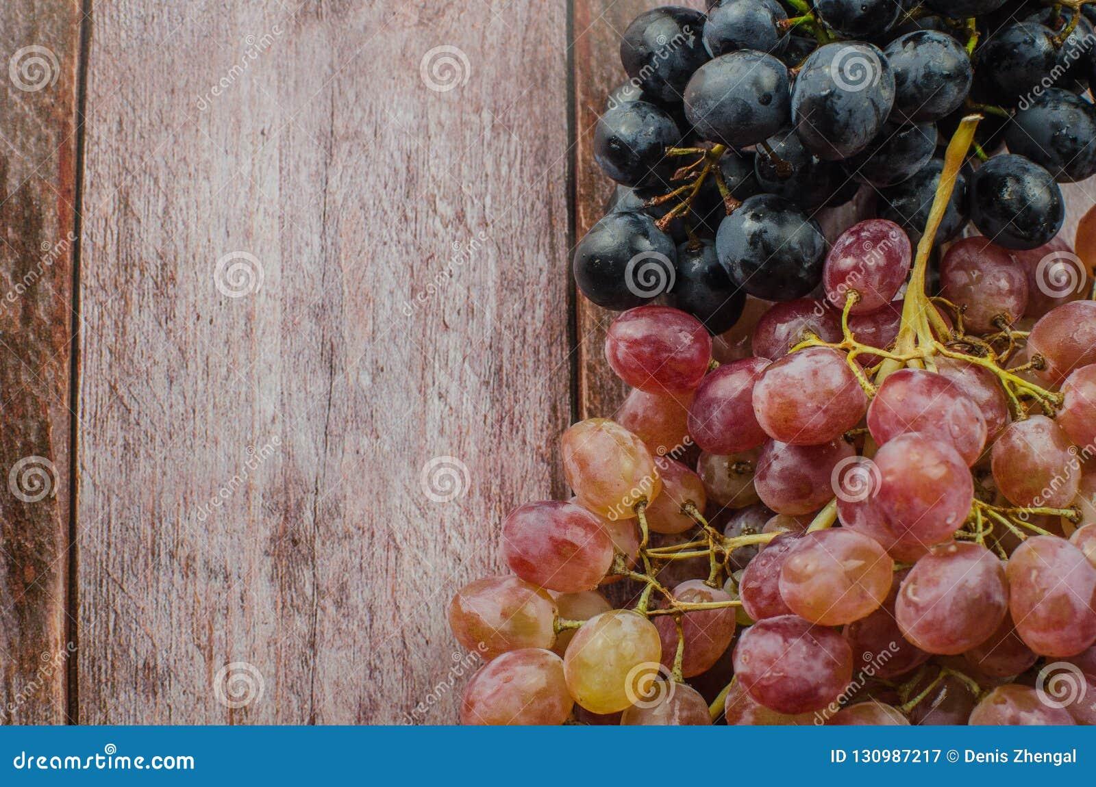Uvas azules con la consumición sana de la hoja verde,