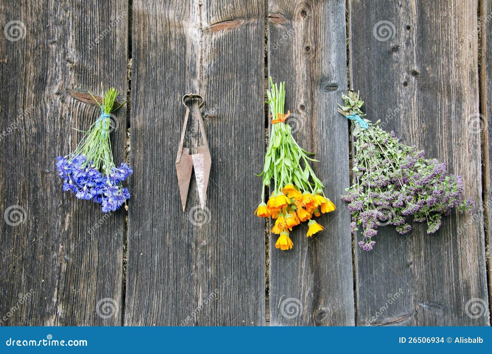 Várias ervas médicas na parede de madeira velha