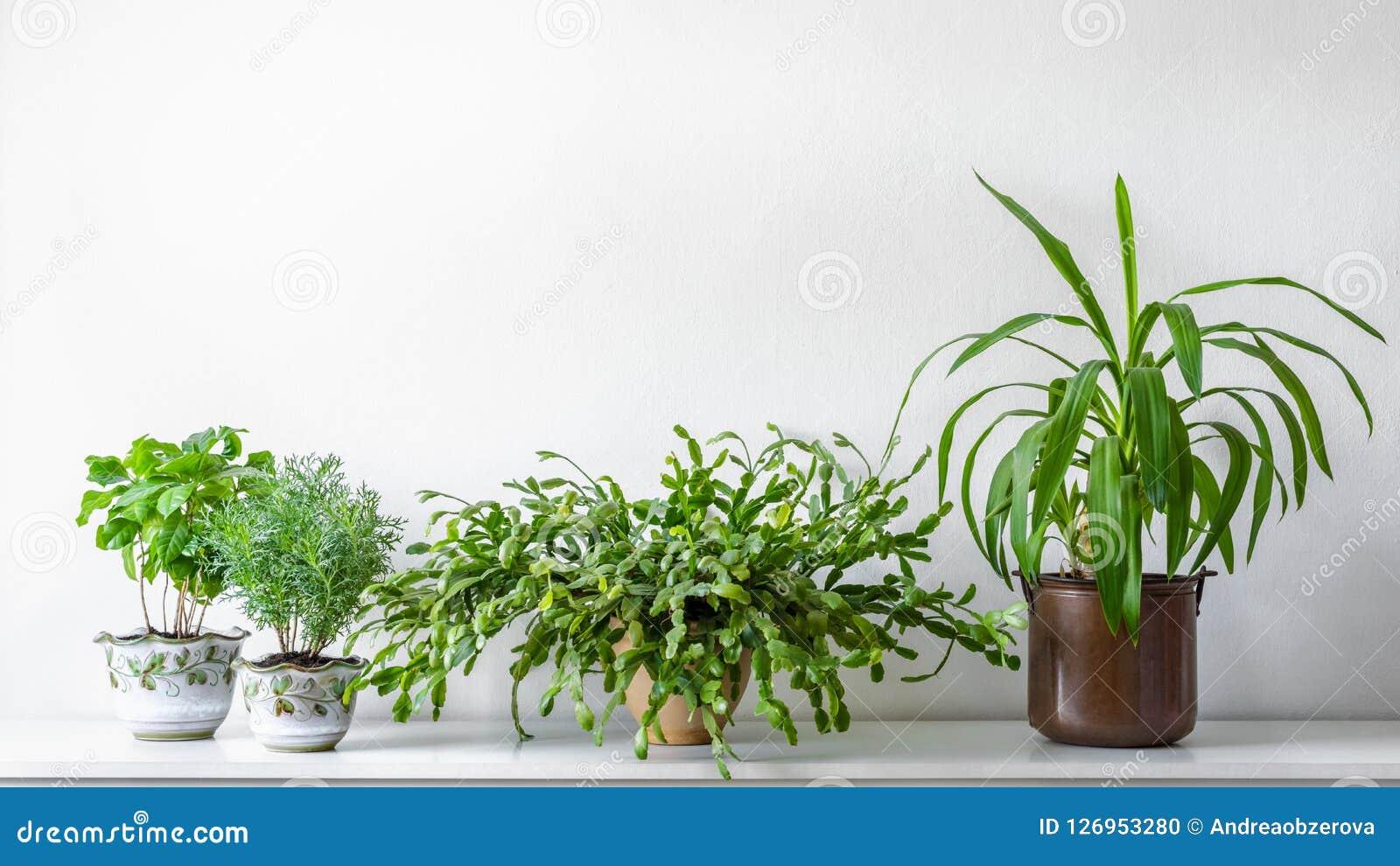 Várias plantas da casa em uns potenciômetros diferentes contra a parede branca Fundo em pasta interno das plantas Decoração moder