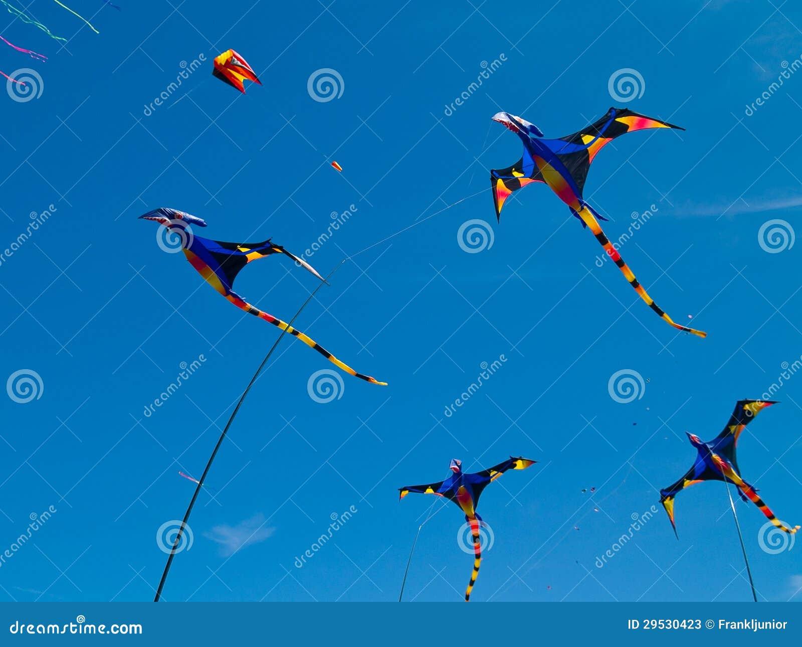 Vários papagaios coloridos do pterodátilo