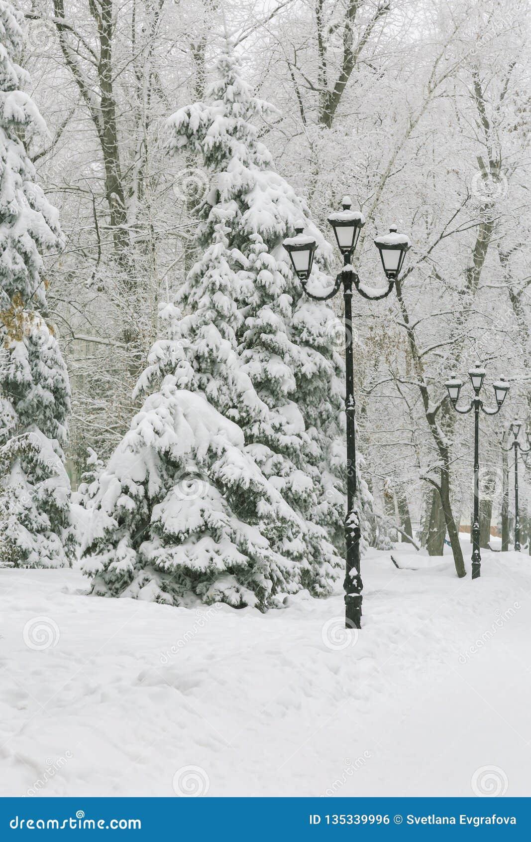 Väder förkylning, vinter i staden Trädfilialer täckte med ny vit snö, och rimfrosten efter snöfall i parkerar på