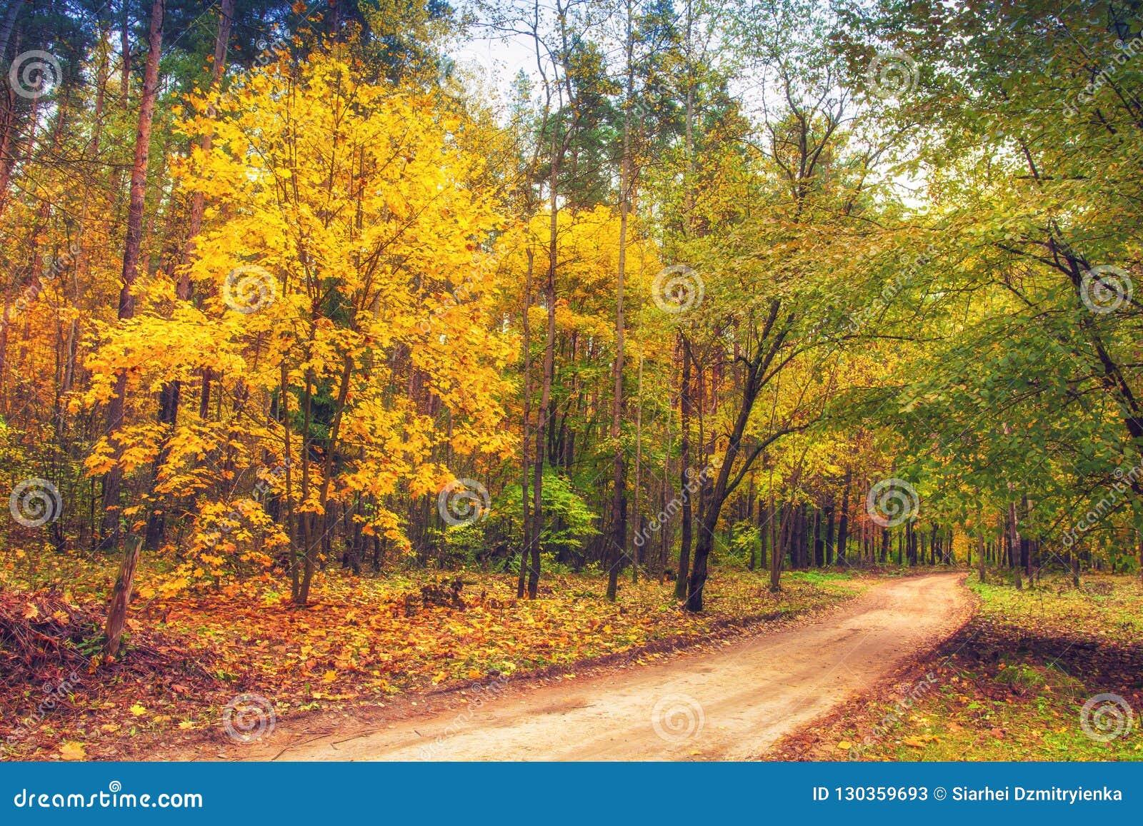 Väg i landskap för höstskognatur fall Färgrika träd i gula sidor för skog på träd i skogsmark