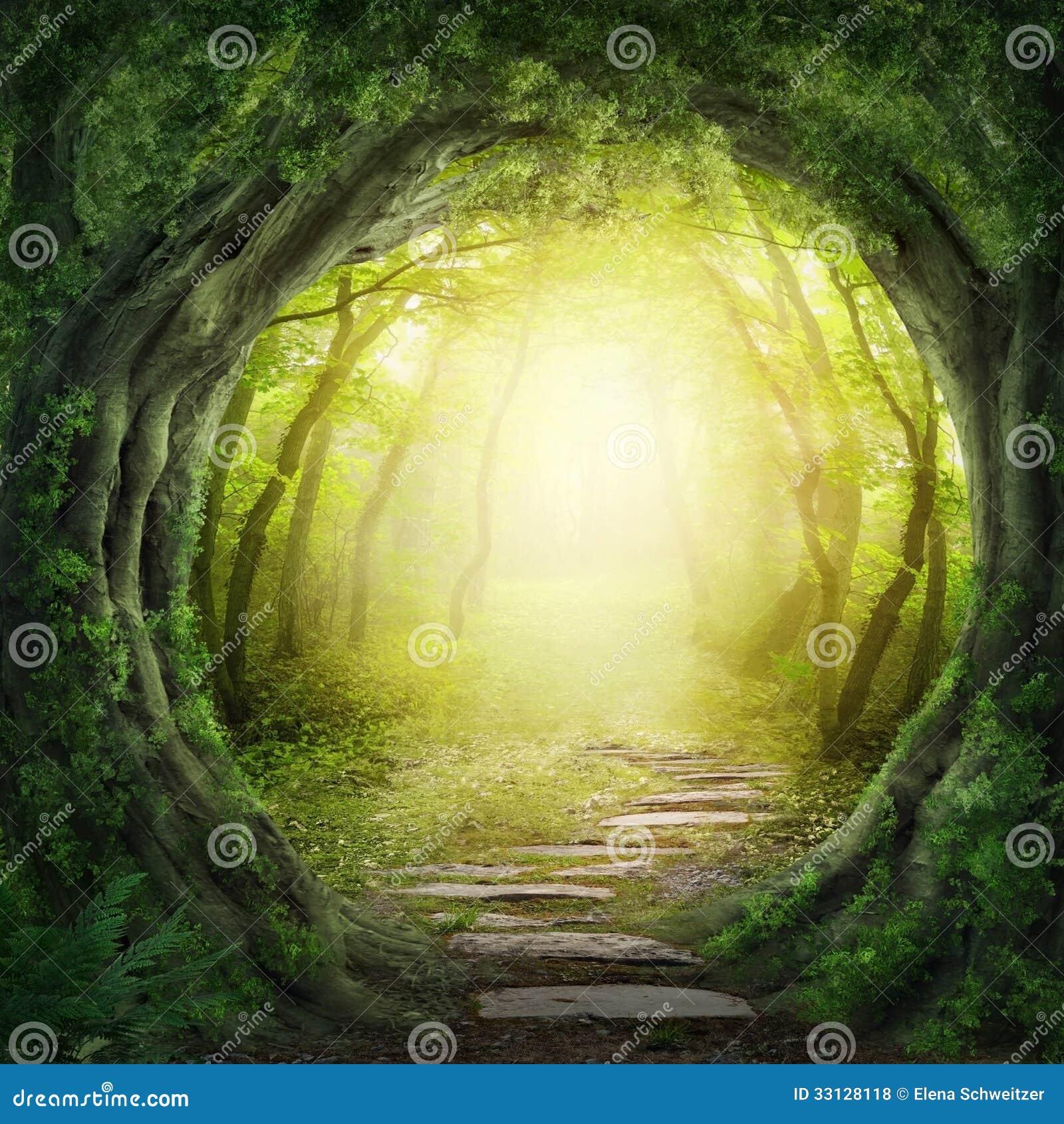 Väg i mörk skog
