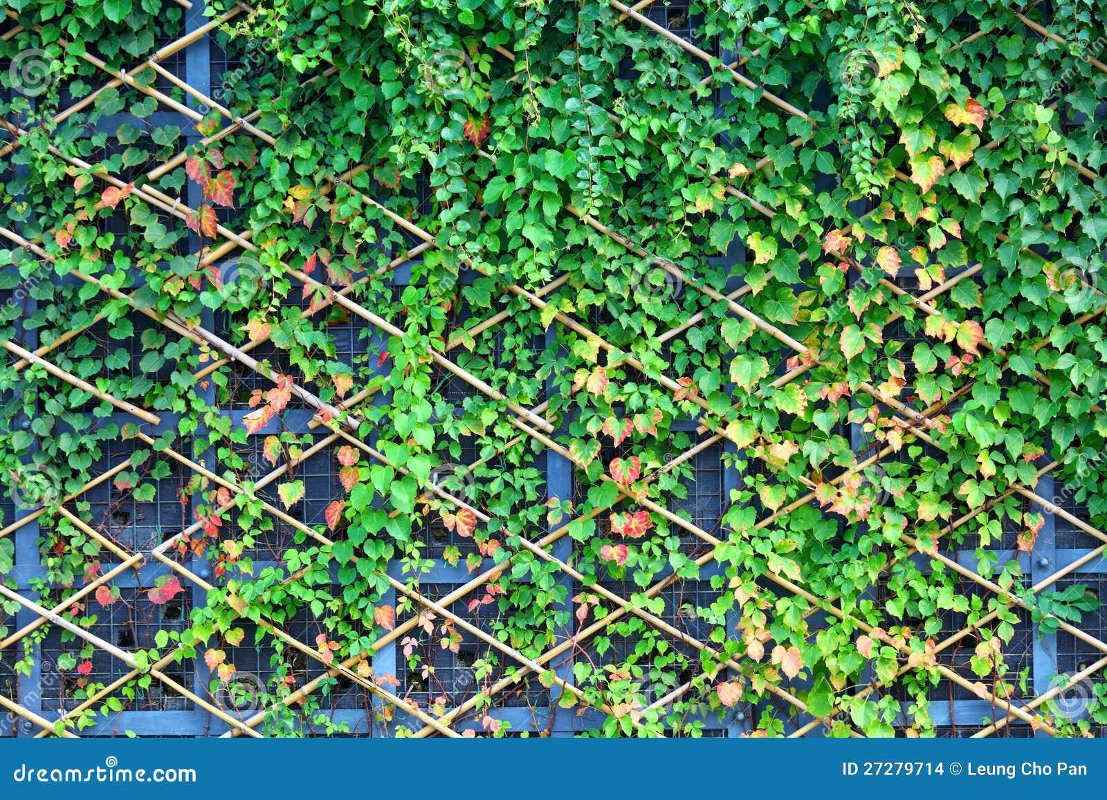 Vägg och gröna växter