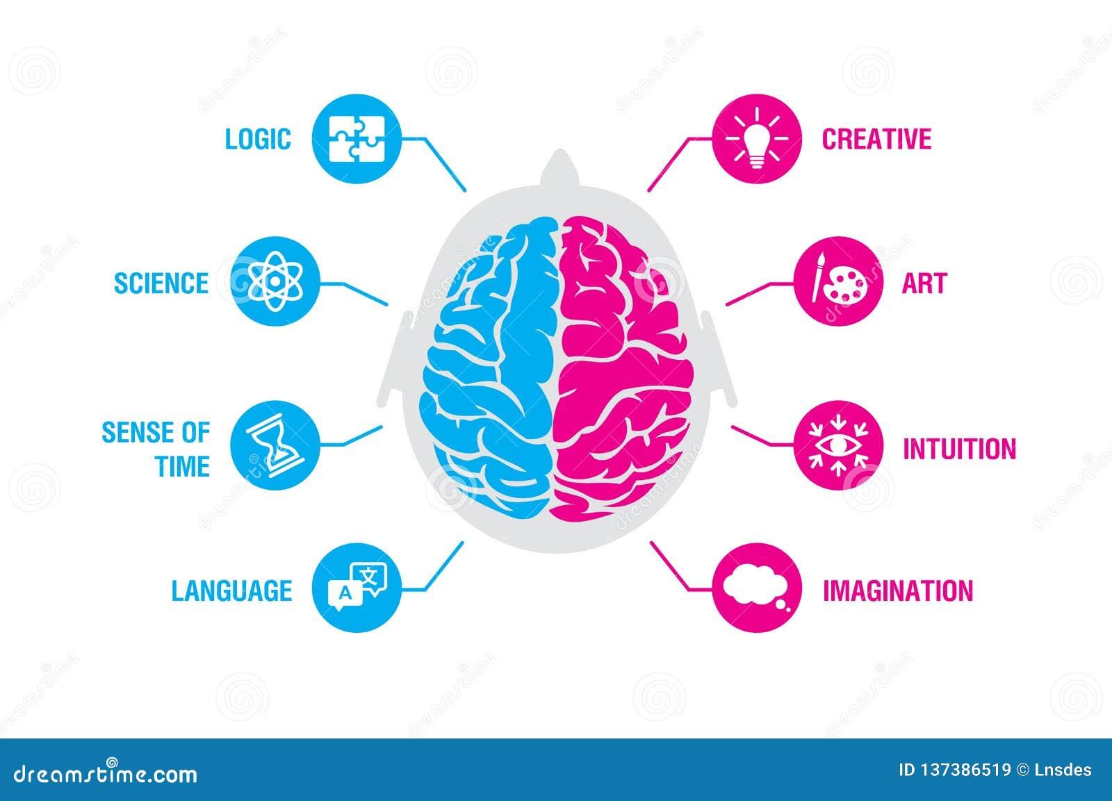 Vänstert och högert begrepp för mänsklig hjärna Logik och idérik halvklotinfographics med hjärnan och symboler av vetenskap, tid