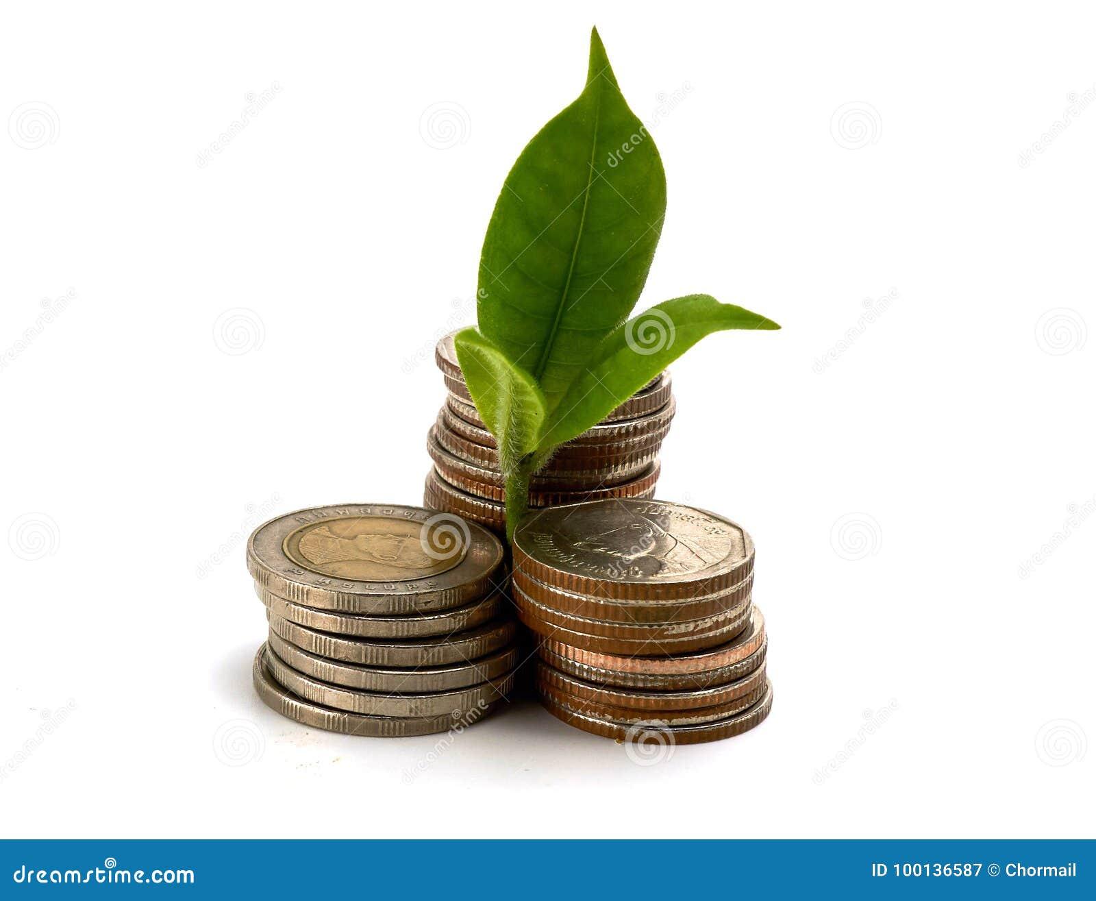 Växa från mynt