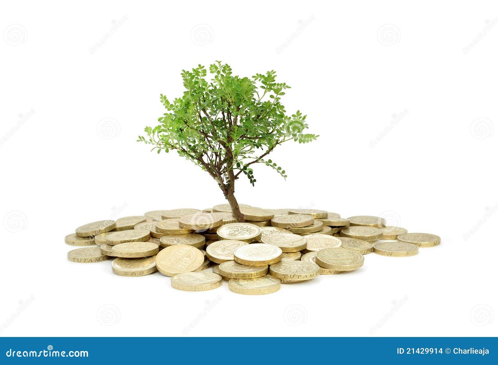 Växande pengartree