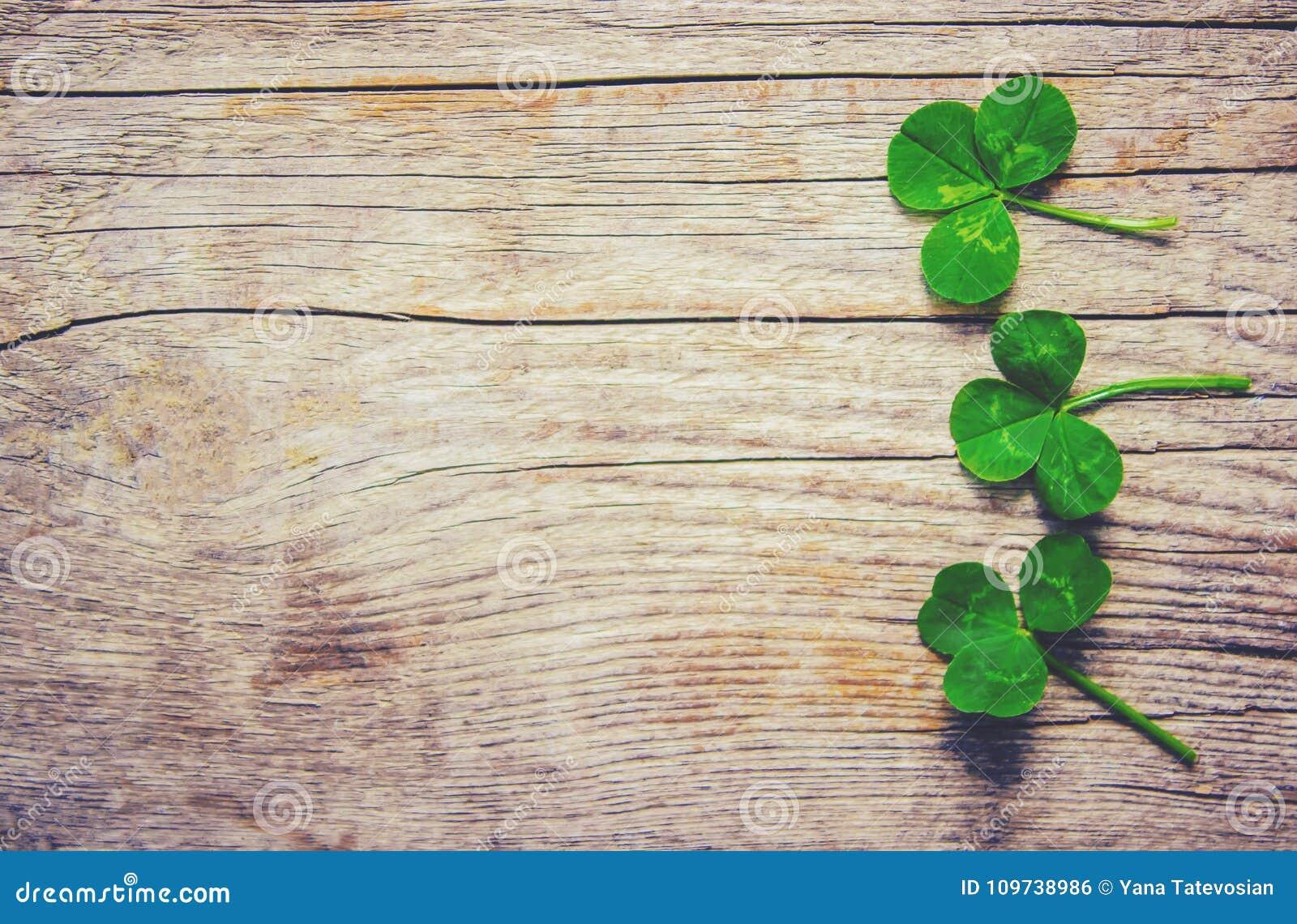 Växt av släktet Trifoliumblad lycklig patrick s för dag st