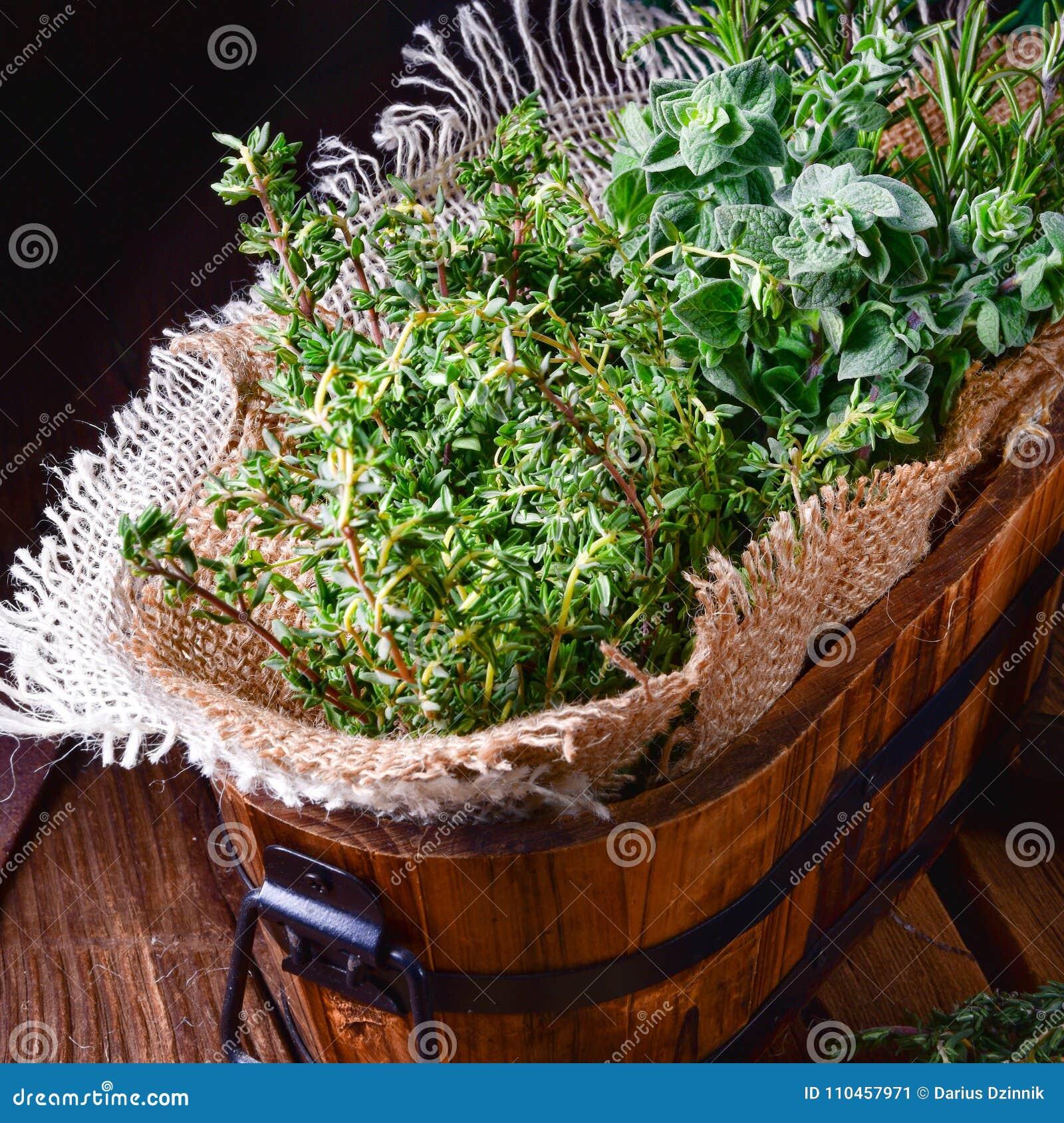 Växt- samling av: timjan oregano, rosmarin