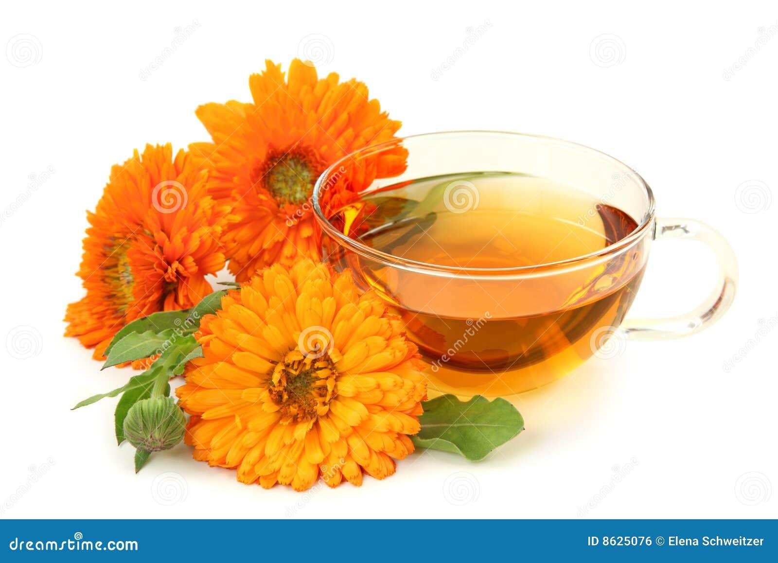 Växt- tea för calendula