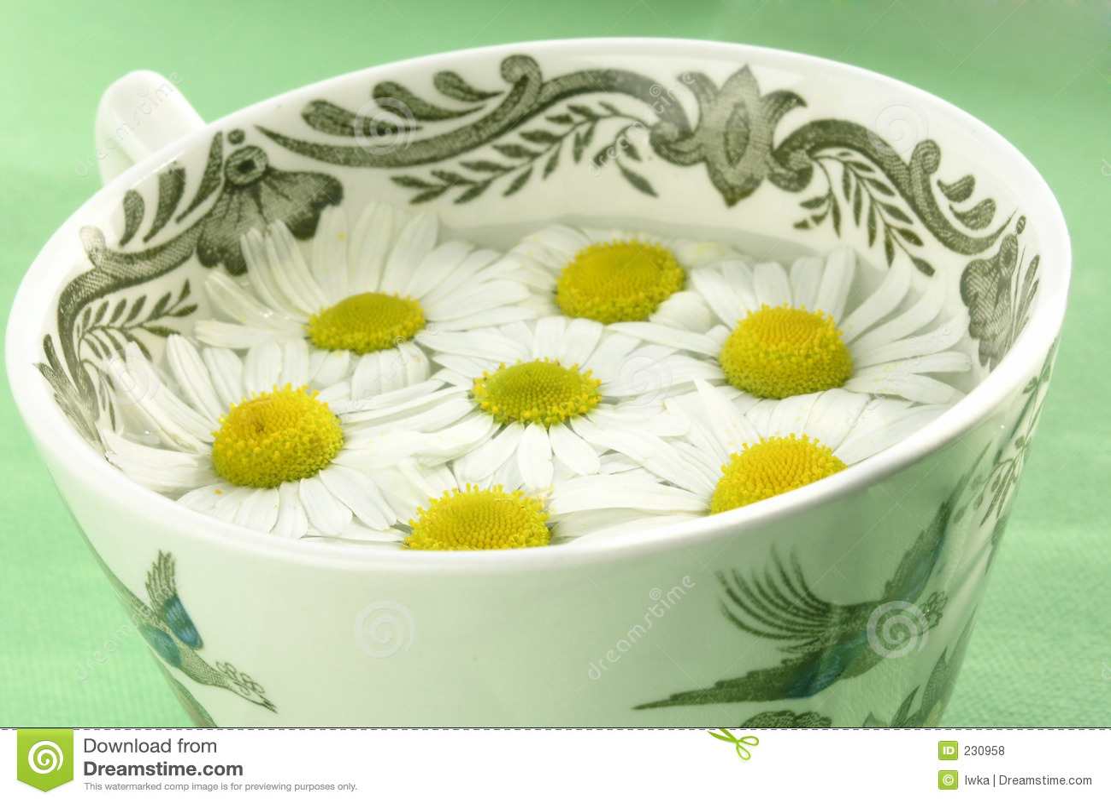 Växt- tea för camomile