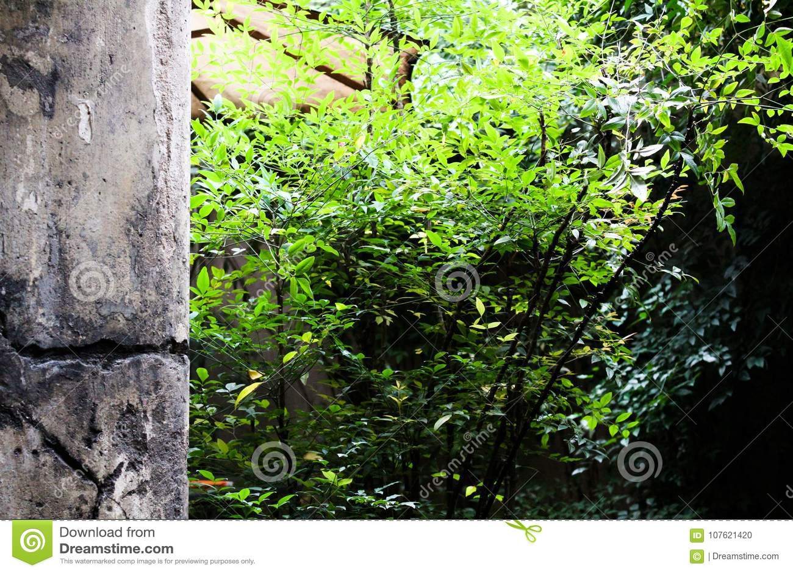 VÄXTER OCH BETONGVÄGG, BRASILIEN - November 30, 2016: växter och