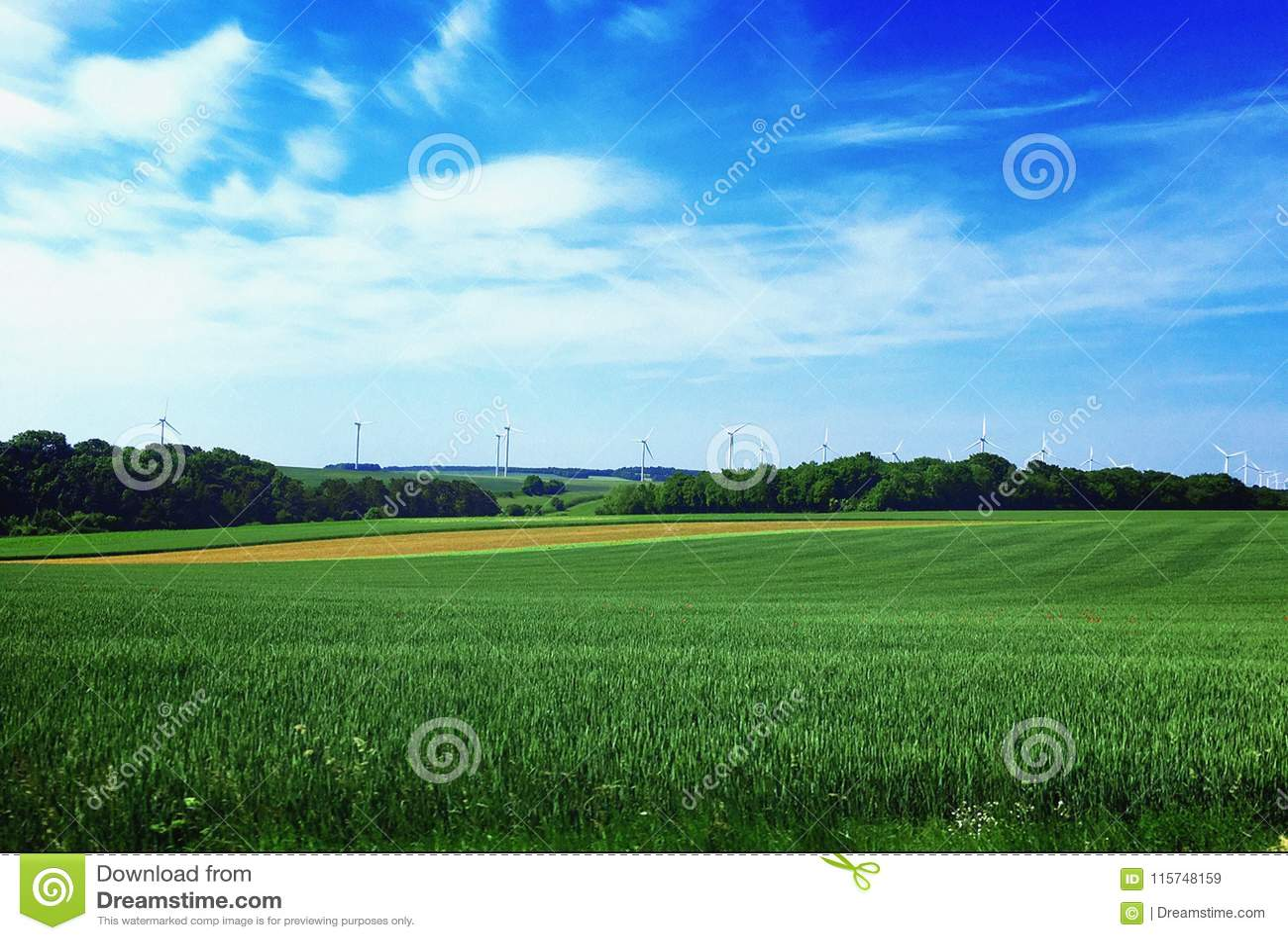 VÄXTER OCH TRÄD, fält, sommar, Luxembourg, Europa
