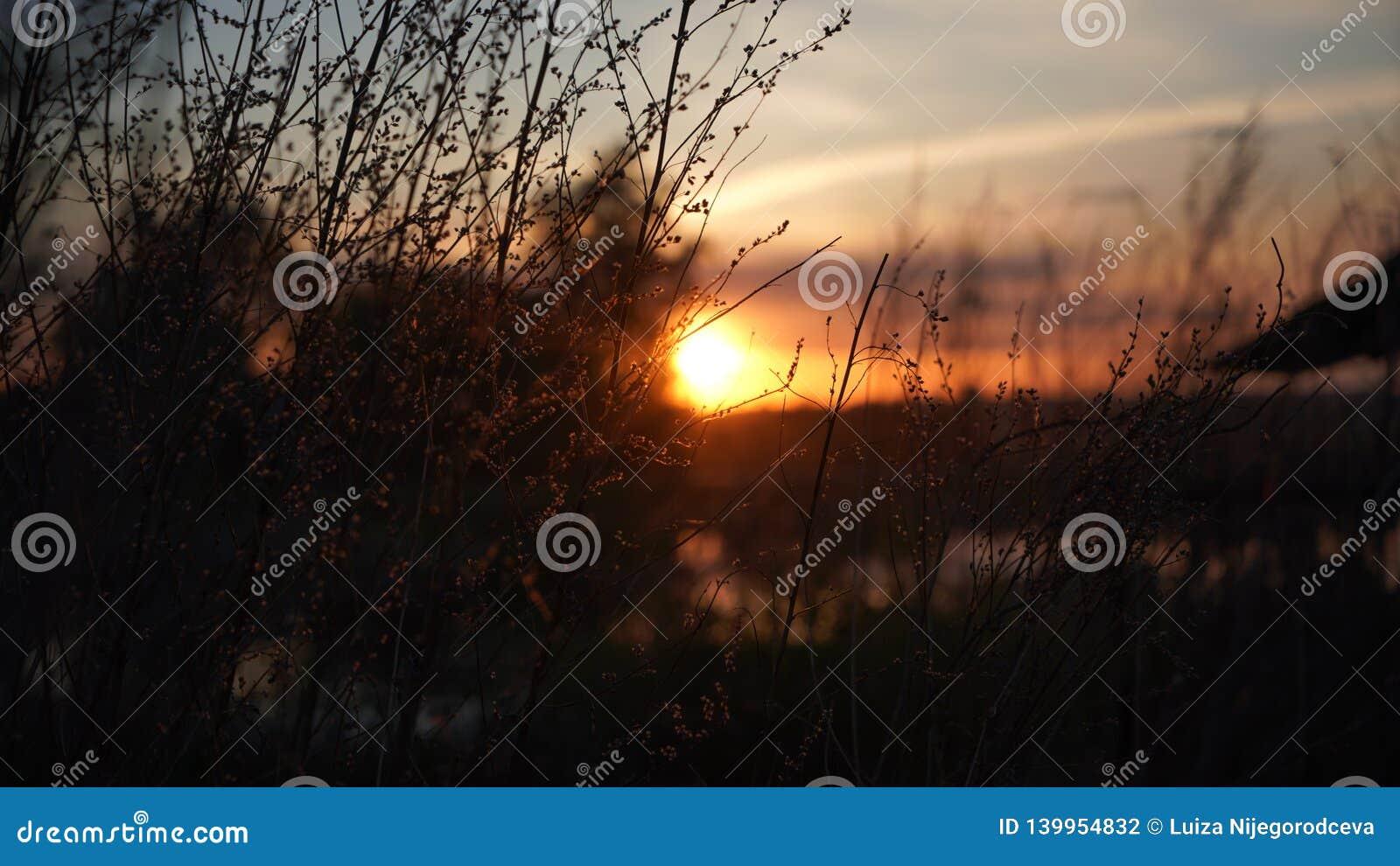 Växter på den Juli solnedgången