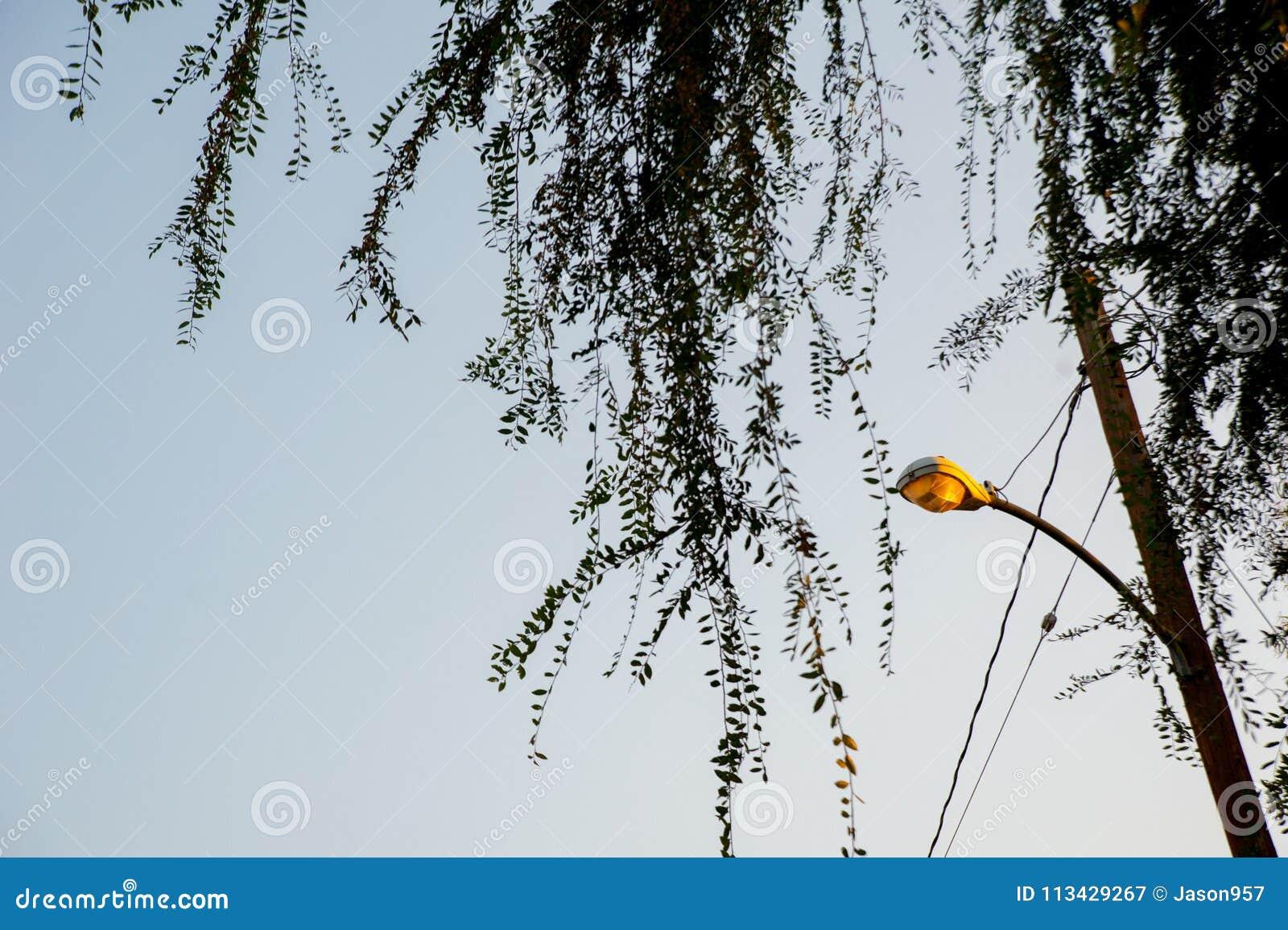 Växter på himlen av Long Beach, Kalifornien Kalifornien är bekant med en goda som lokaliseras huruvida i Förenta staterna I somma