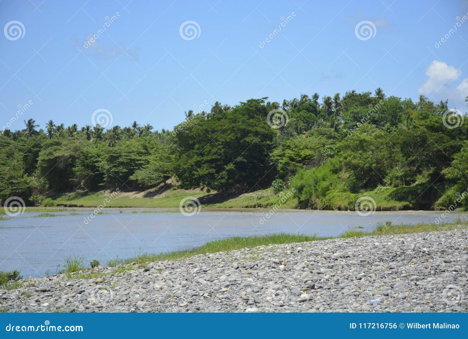 Växter som är fullvuxna i flodstranden av den Padada-Miral floden, Lapulabao, Hagonoy, Davao del Sur, Filippinerna