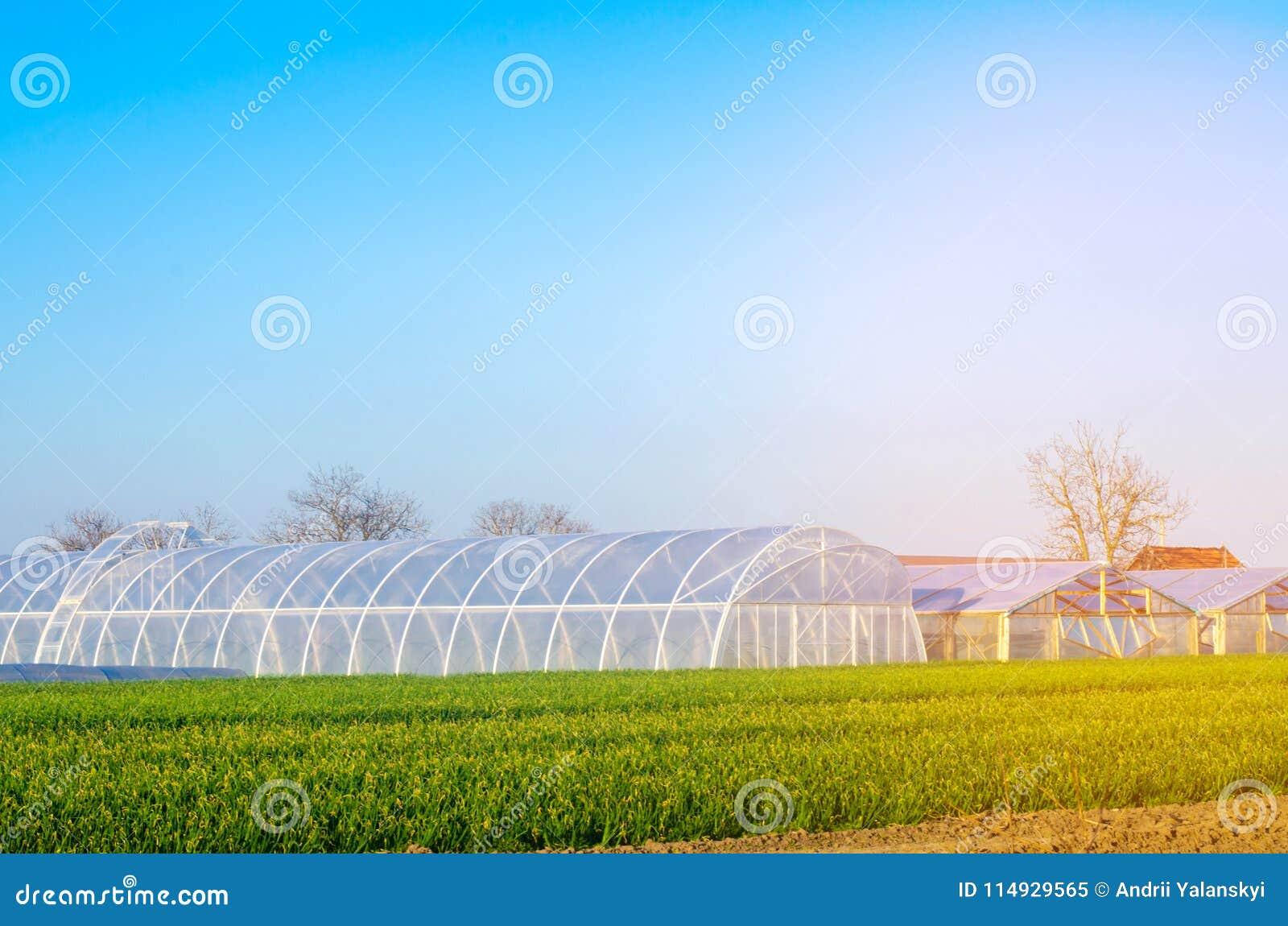 Växthus i fältet för plantor av skördar, frukter, grönsaker som lånar till bönder, jordbruksmarker, jordbruk, landsbygder som är