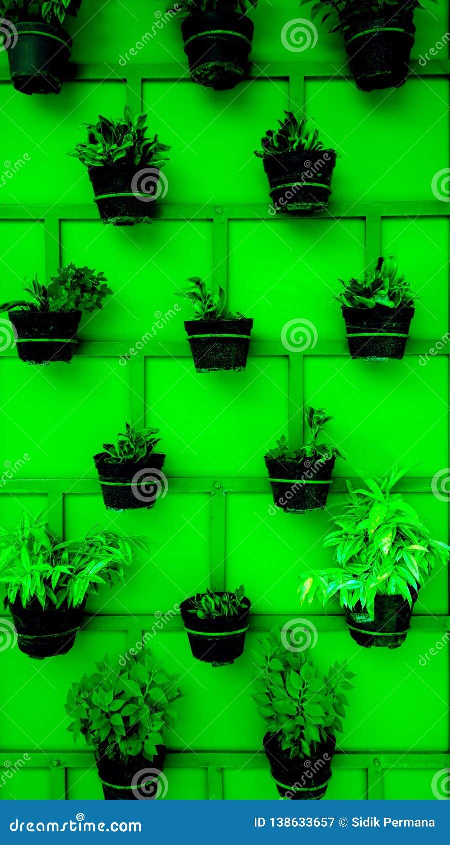 Växtkrukor som ordnas trevligt på väggen