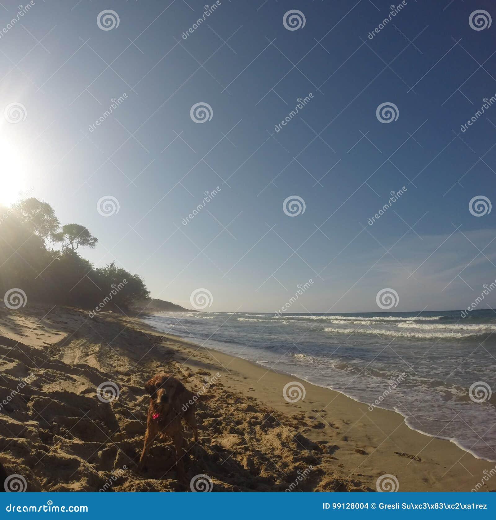 Vågor och fred i stranden