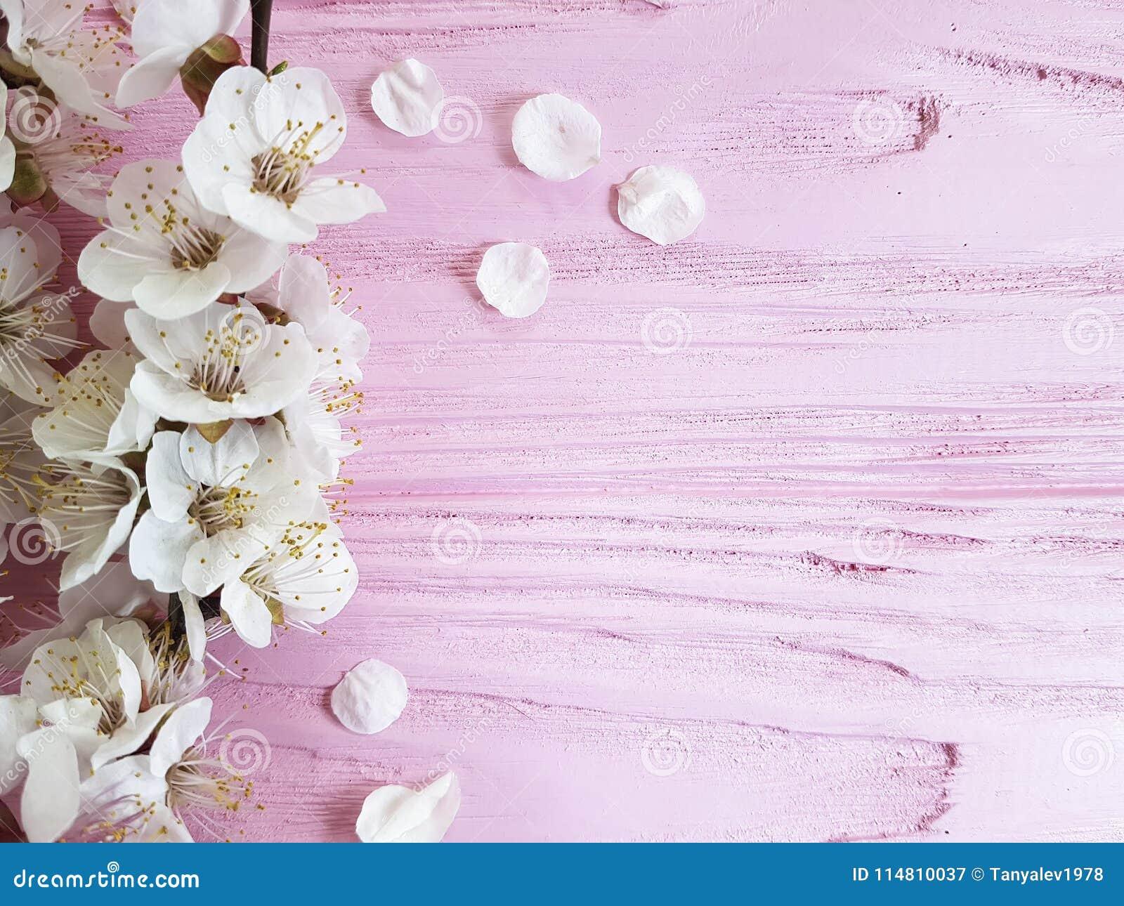 Vår för tappning för filial för körsbärsröd blomning ny på en rosa träbakgrund