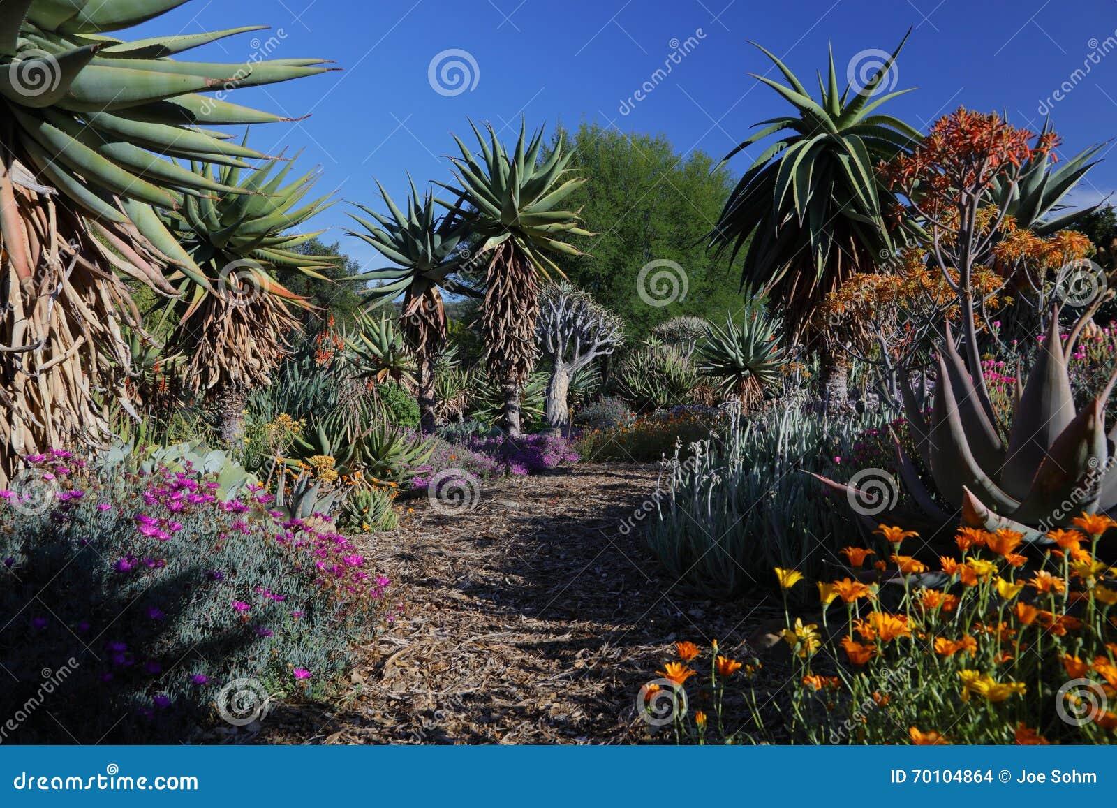 Vårblom i Kalifornien på Taft botaniska trädgårdar, Ojai C