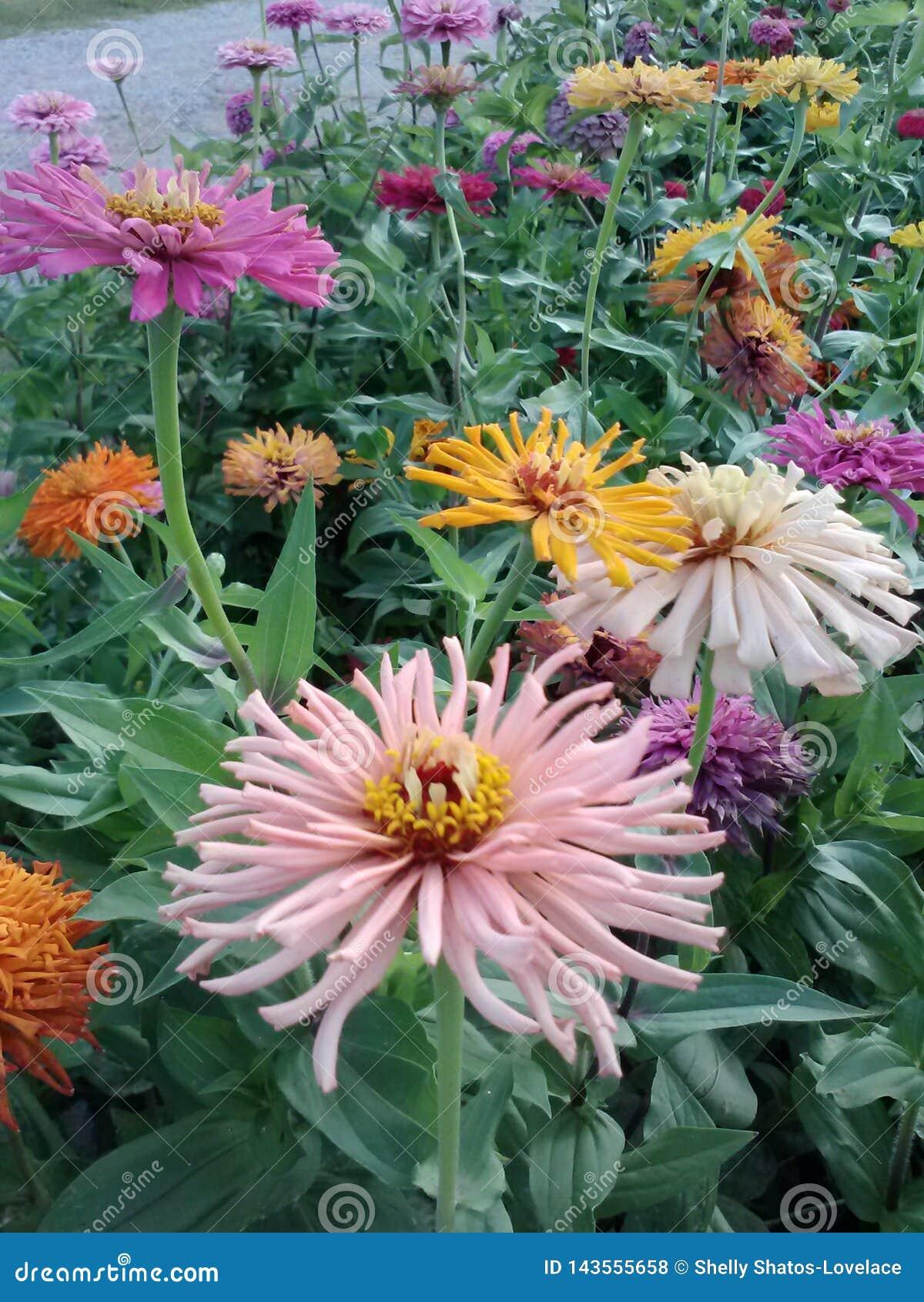 Vårblommaträdgård