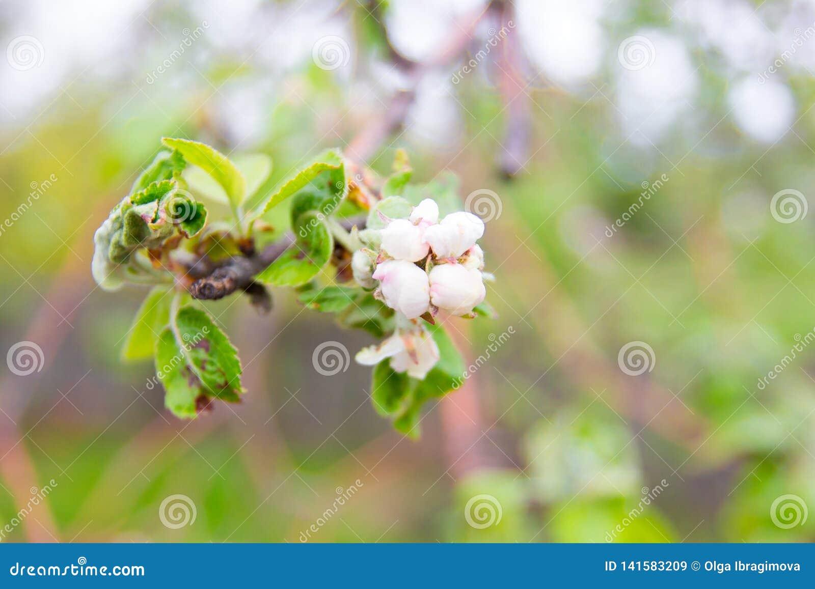Vårblommor och bakgrund med bokeh