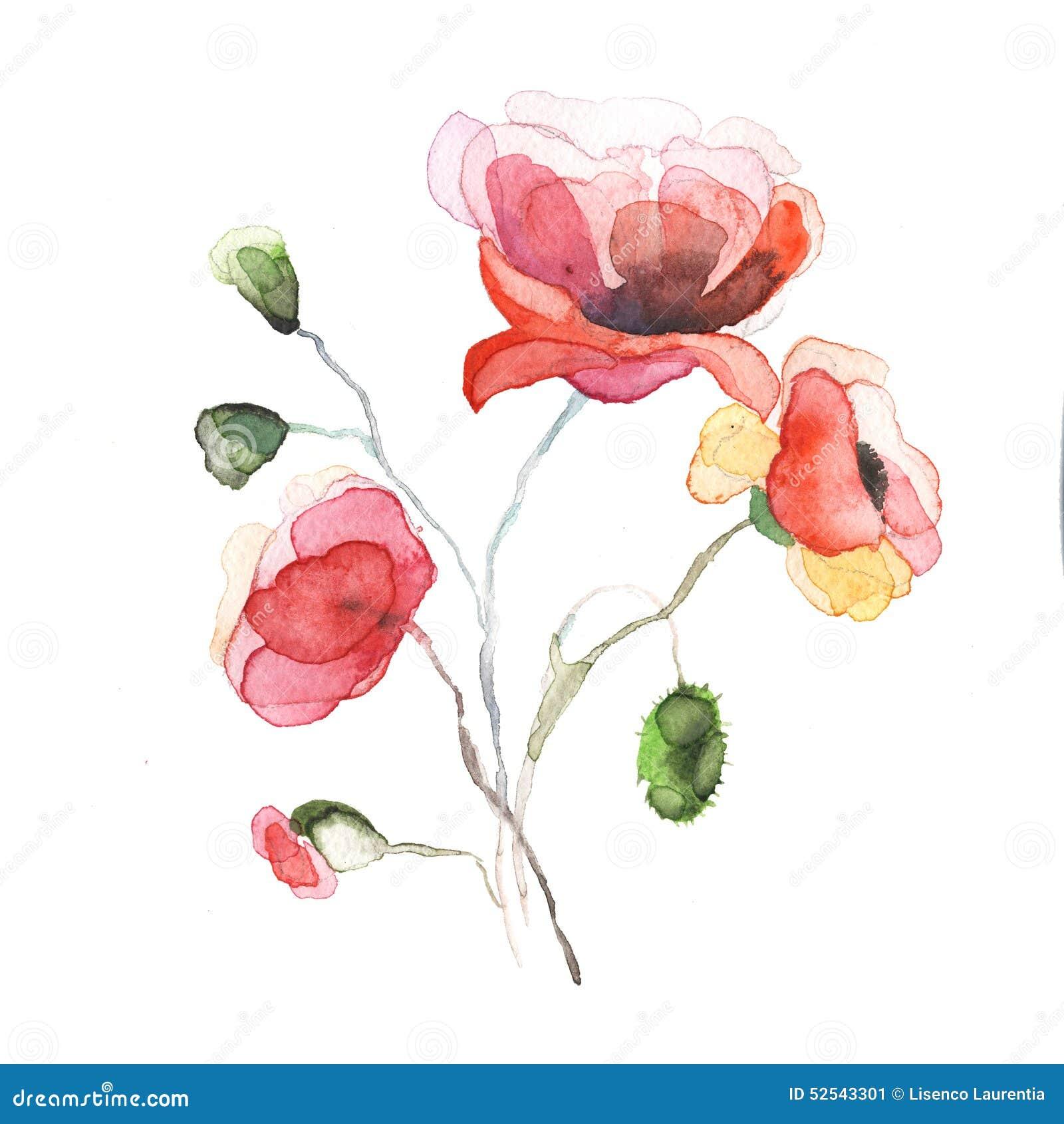 Våren blommar den isolerade vallmomålningvattenfärgen