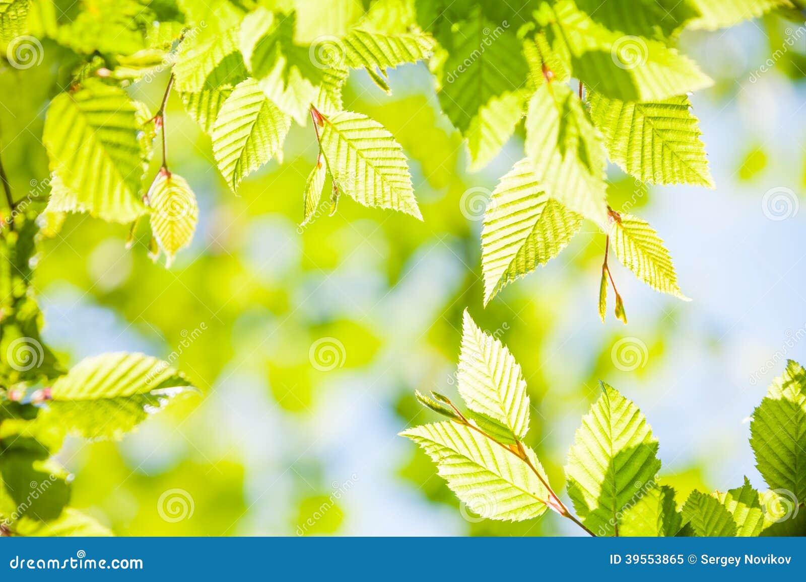 Vårgräsplansidor