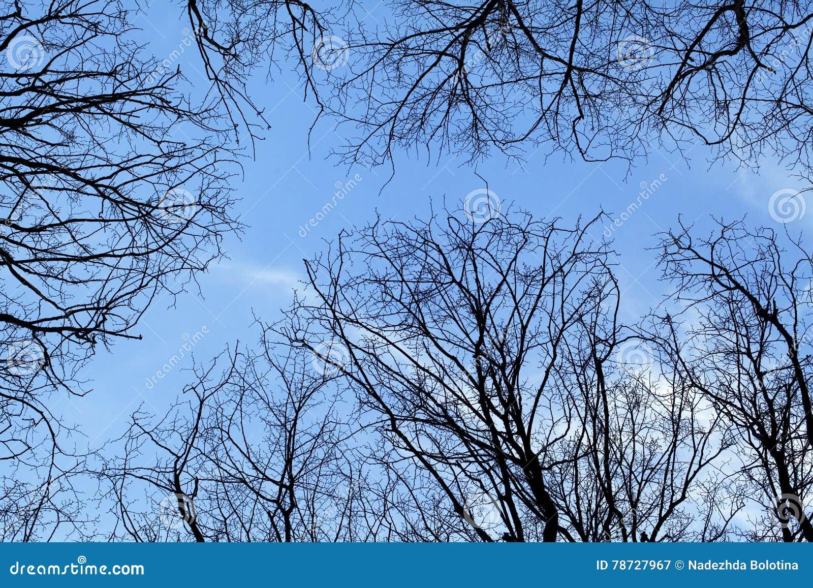 Vårträd, beskådar underifrån