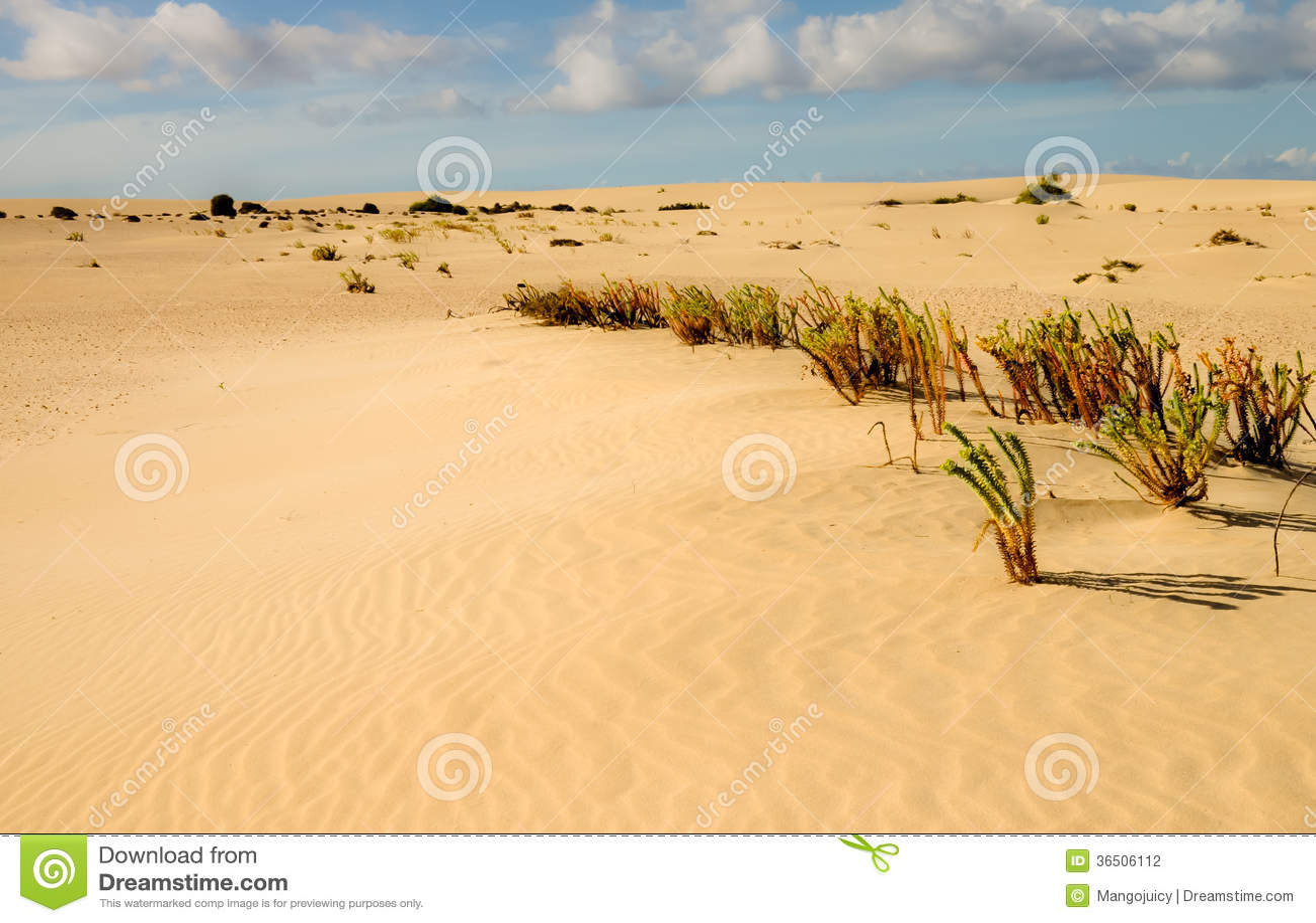 Végétation de désert