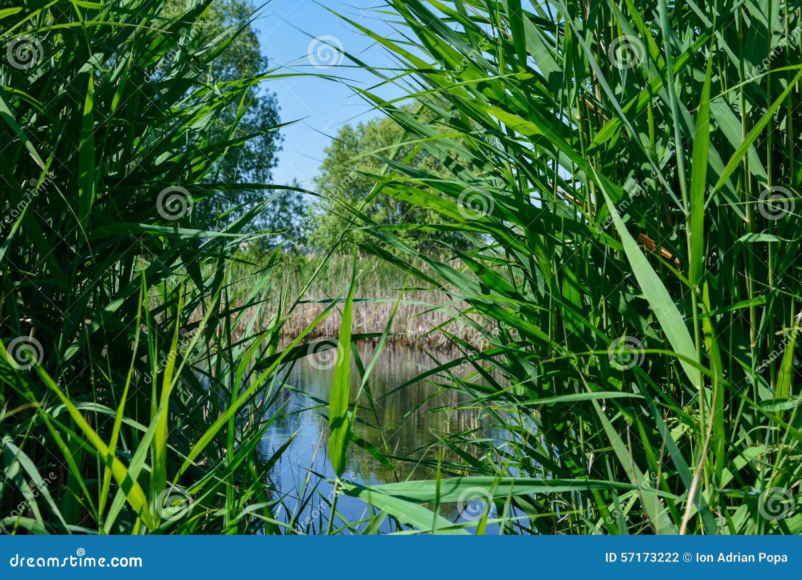 Végétation sauvage dans le delta