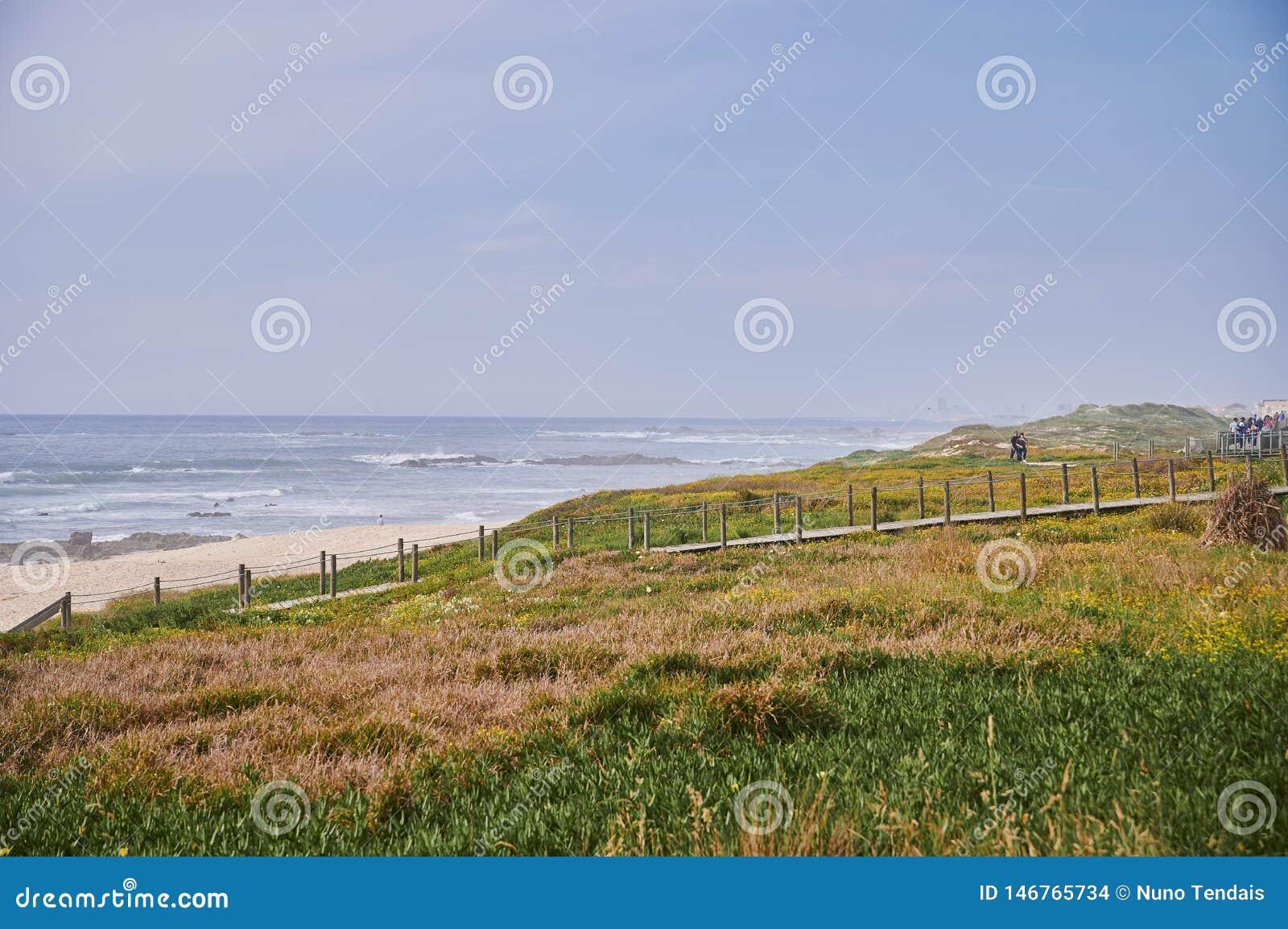 Végétation sur les dunes devant la mer