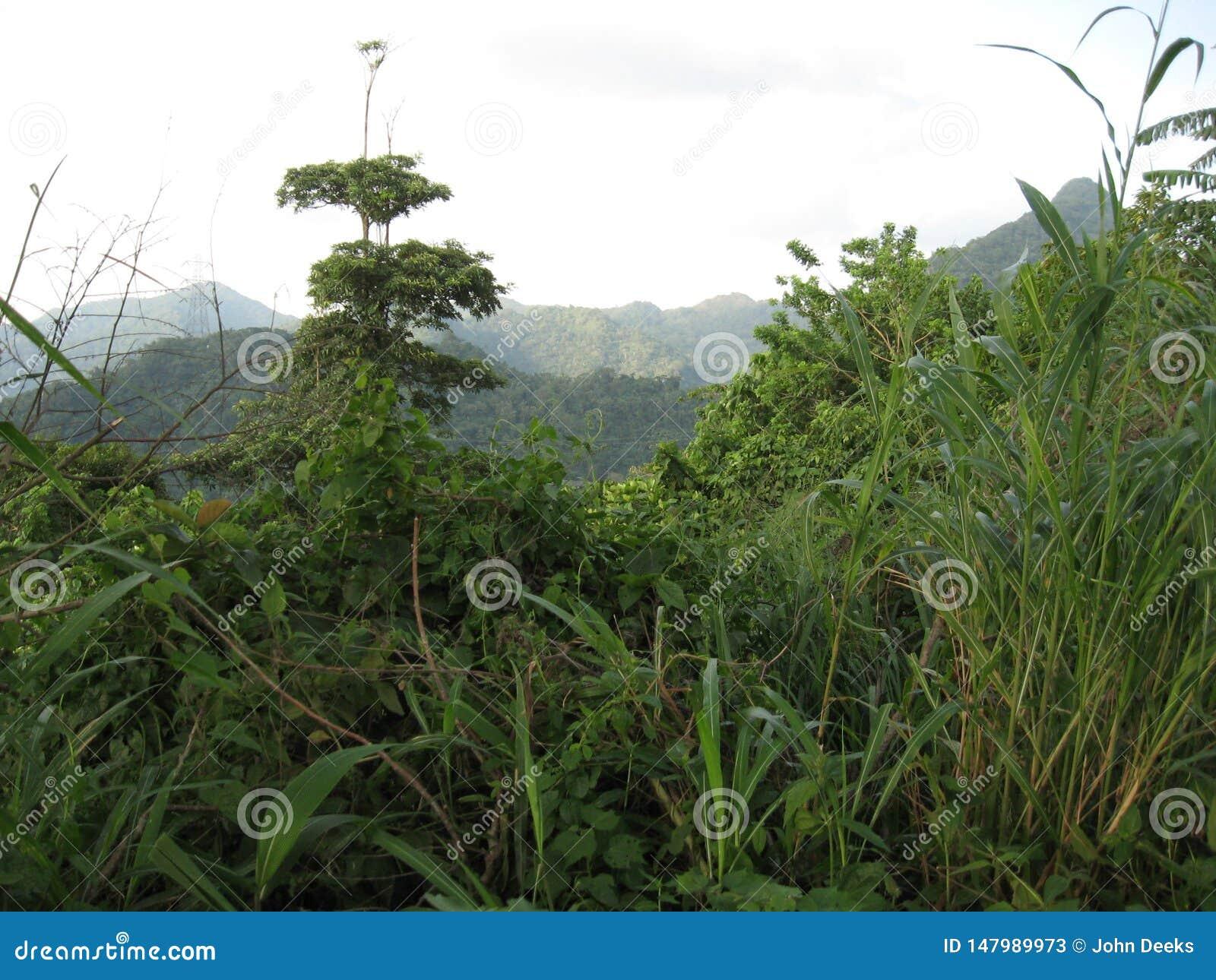 Végétation tropicale près de San Isidro, ville de Lipa, Philippines