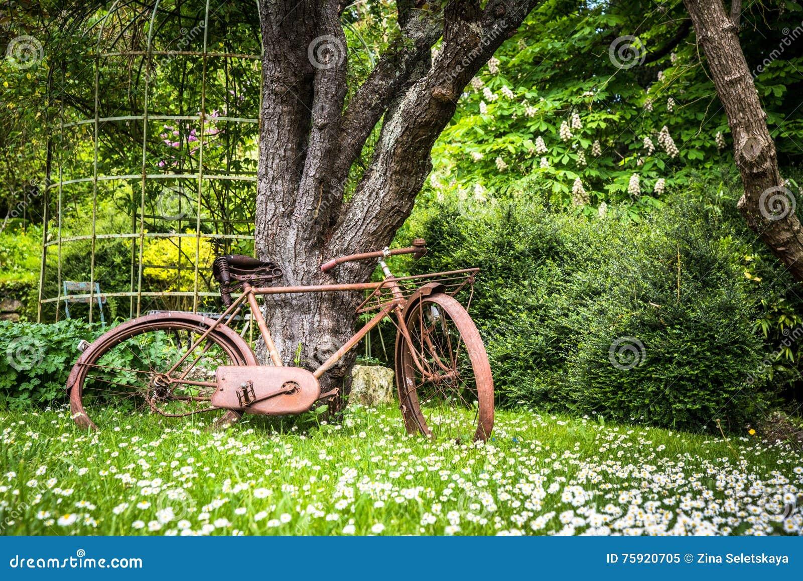 Vélo De Vintage Dans Le Jardin Image stock - Image du rétro ...