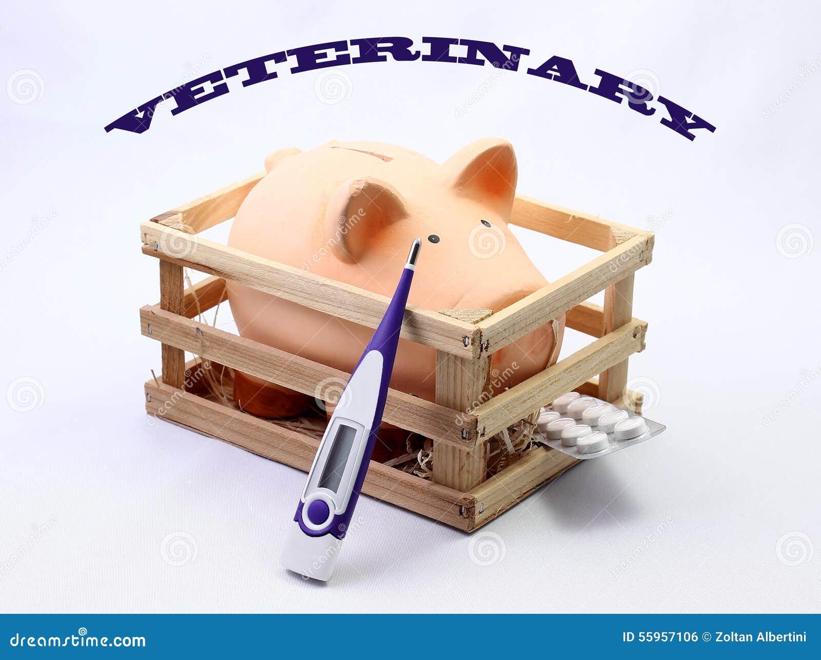 Vétérinaire de porc