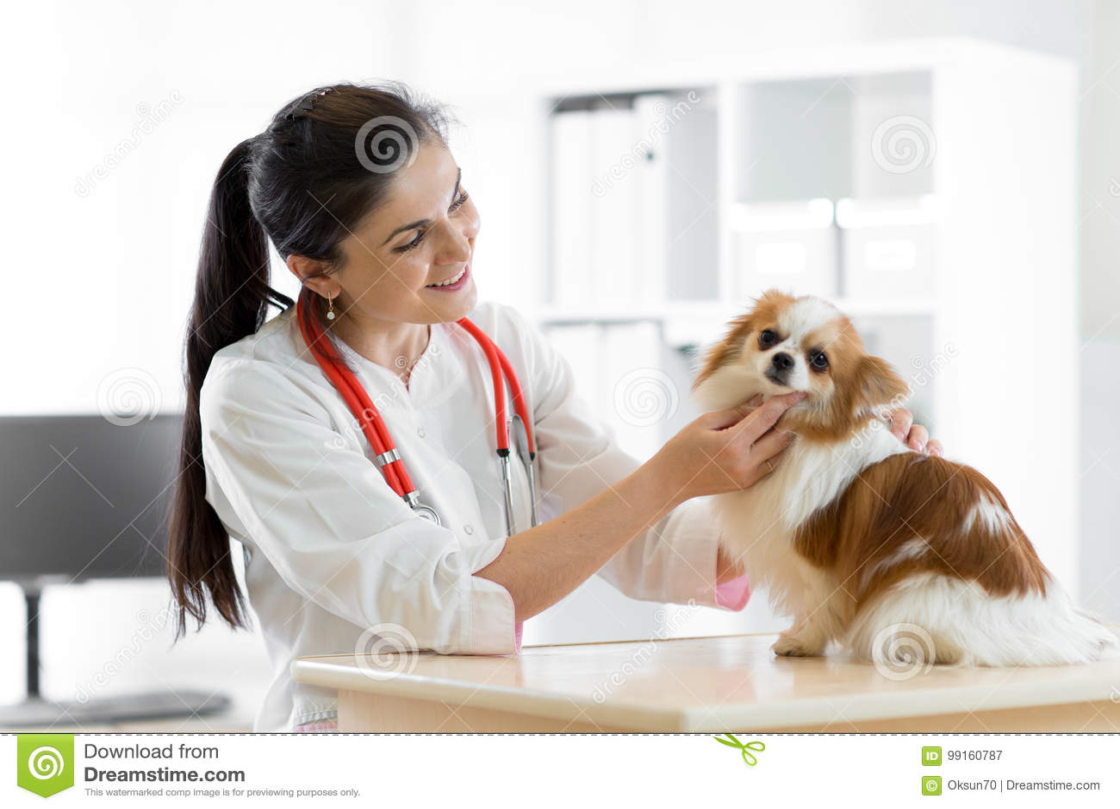 Vétérinaire de sourire avec le chien, sur la table dans la clinique de vétérinaire