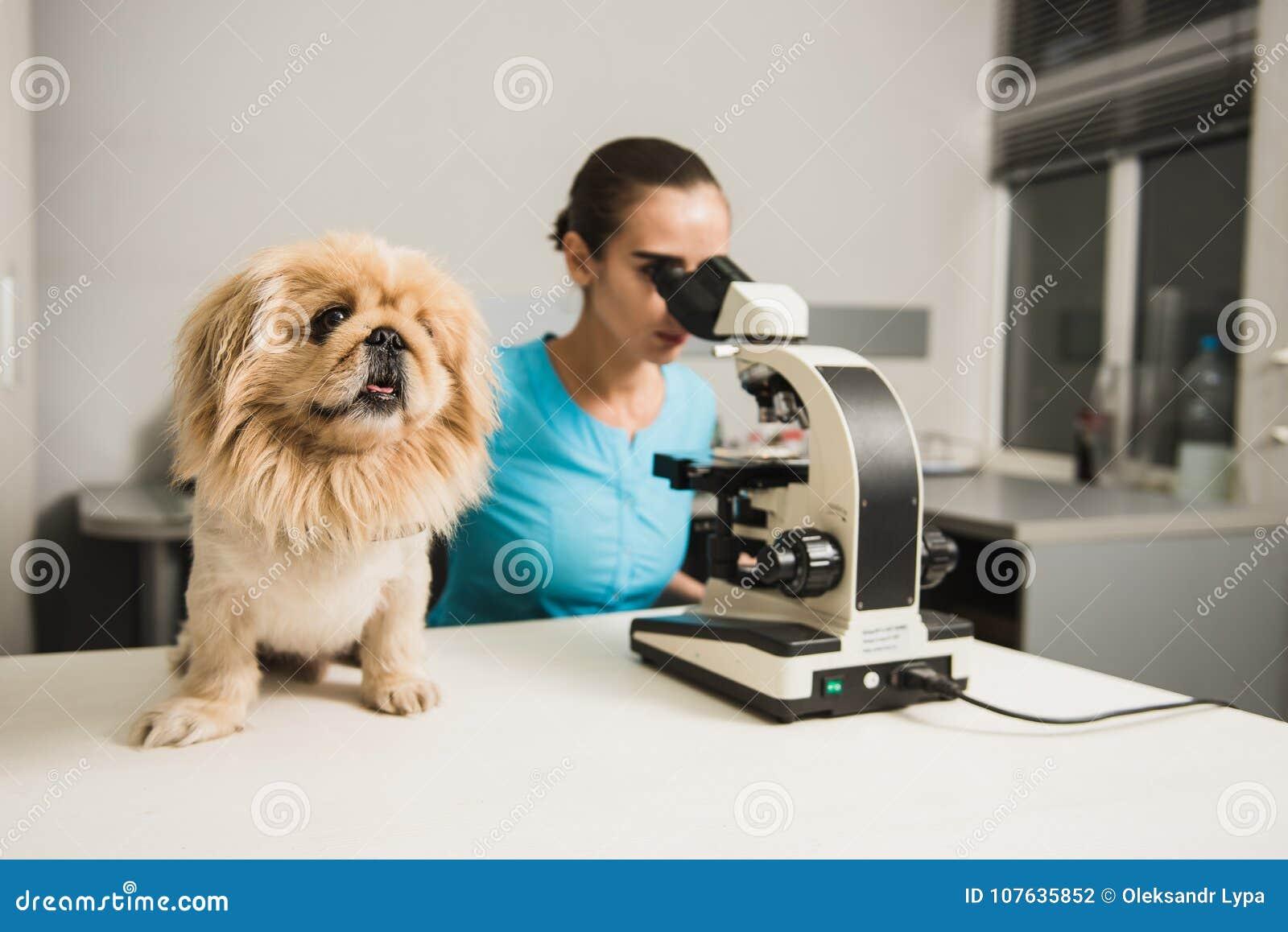 Vétérinaire féminin avec le chien et le microscope