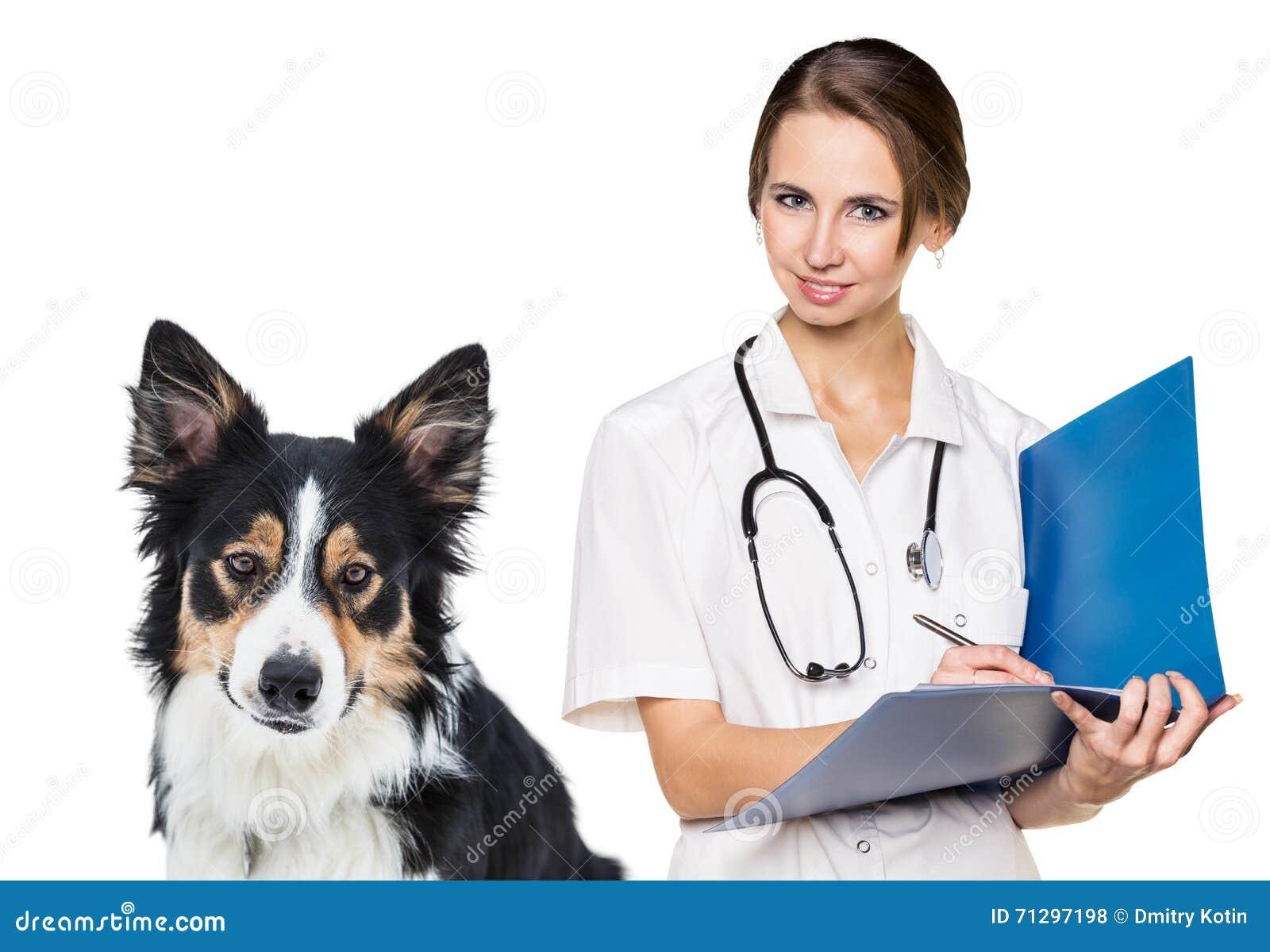 Vétérinaire féminin avec un beau chien